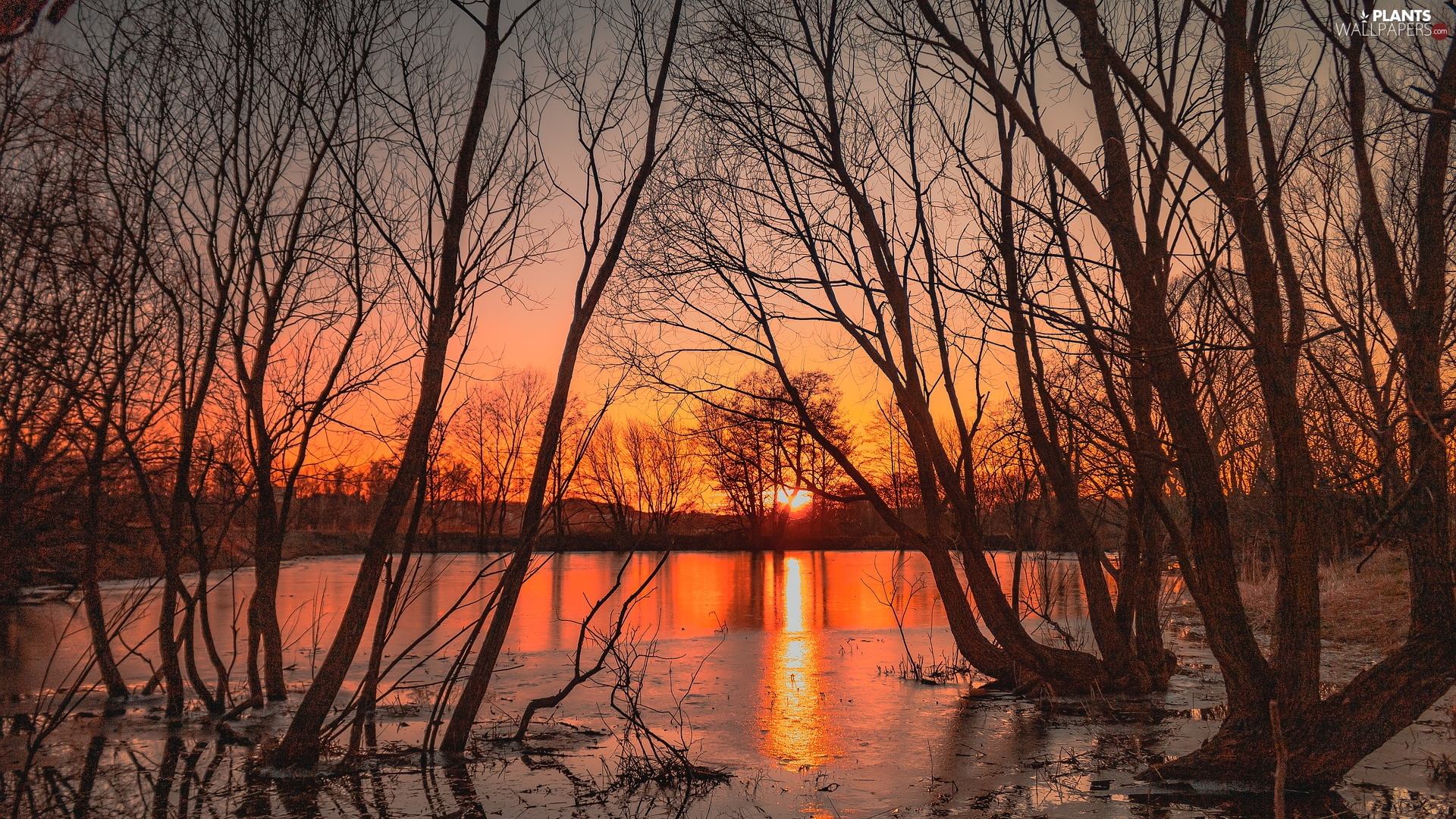 trees, Pond - car, autumn, Great Sunsets, viewes, leafless