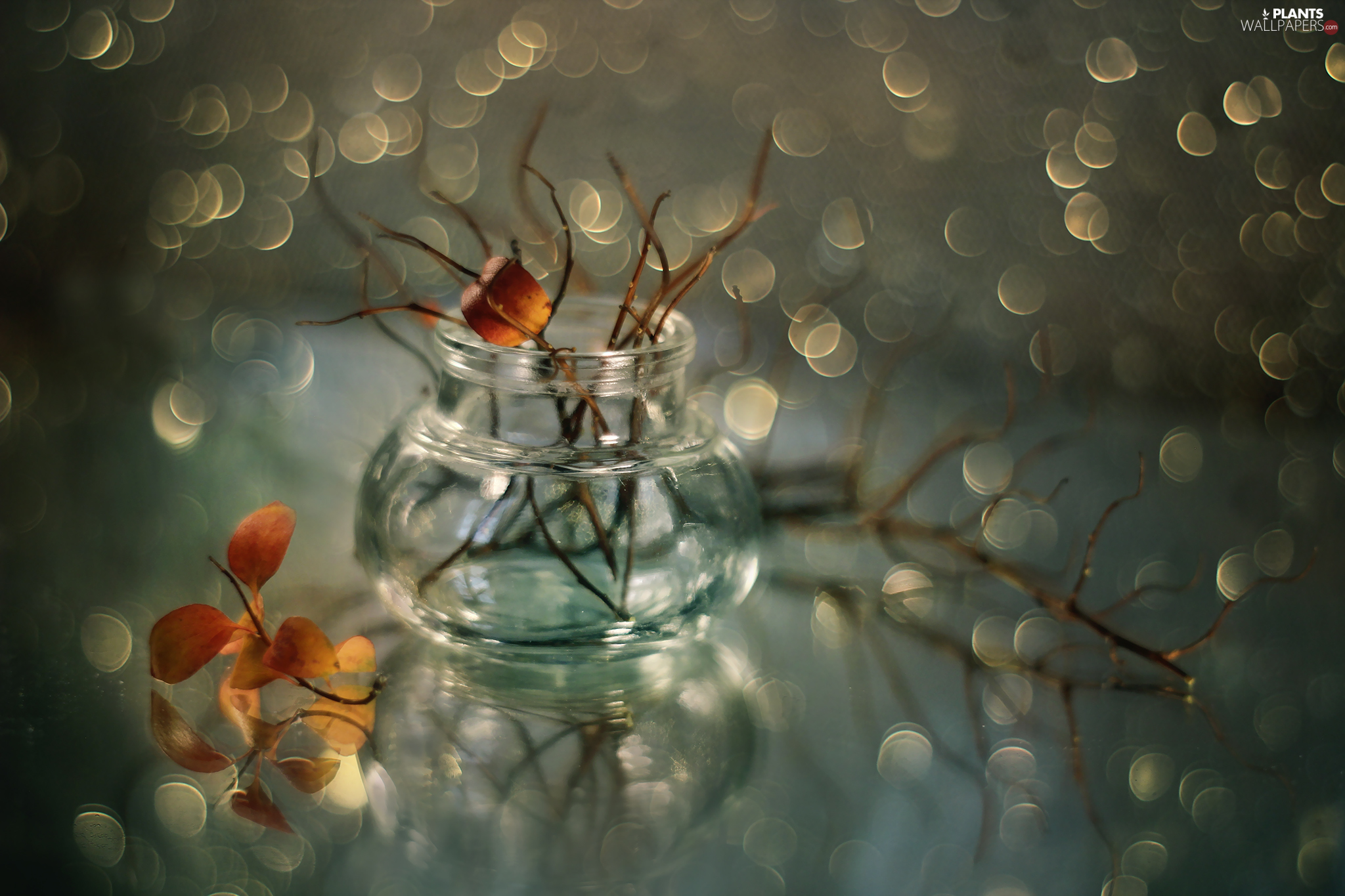 Bokeh, leaves, Twigs, vase, dry