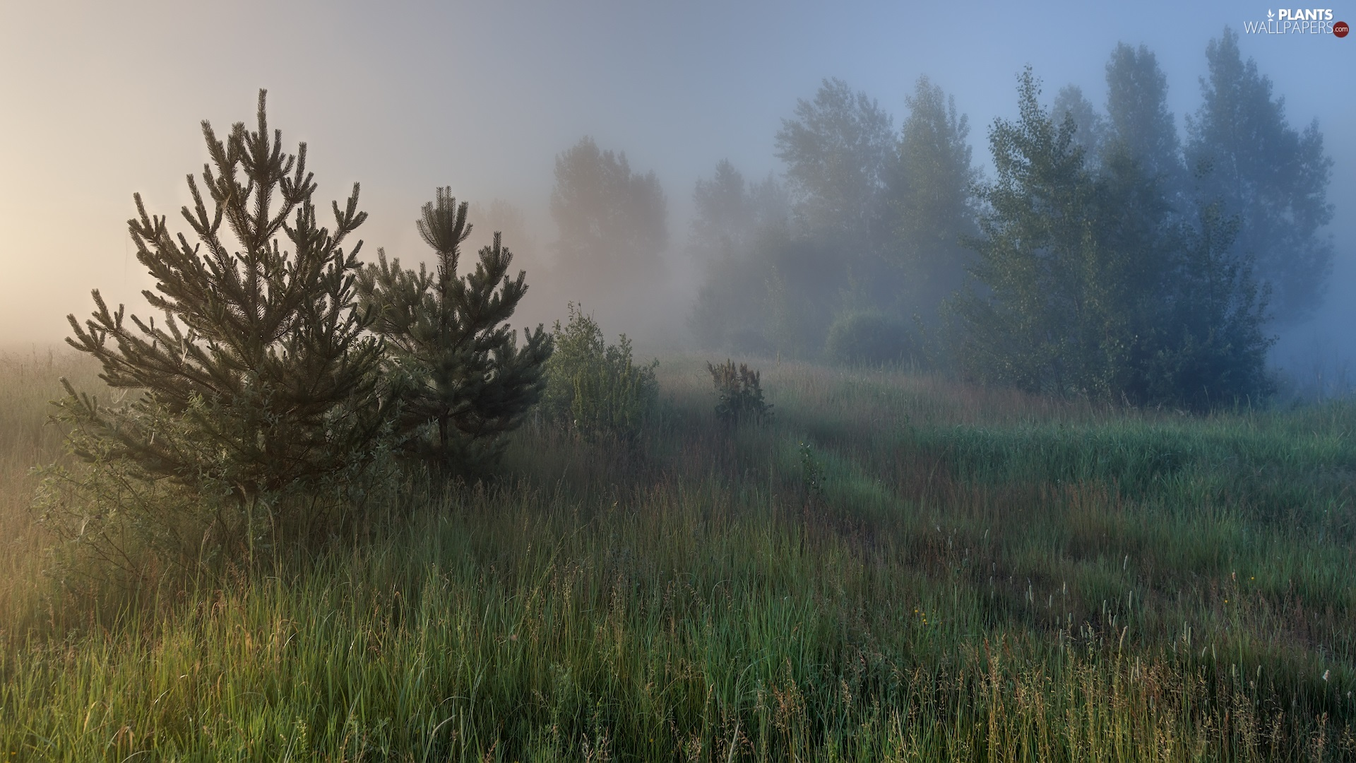 Fog, Meadow, viewes, grass, trees