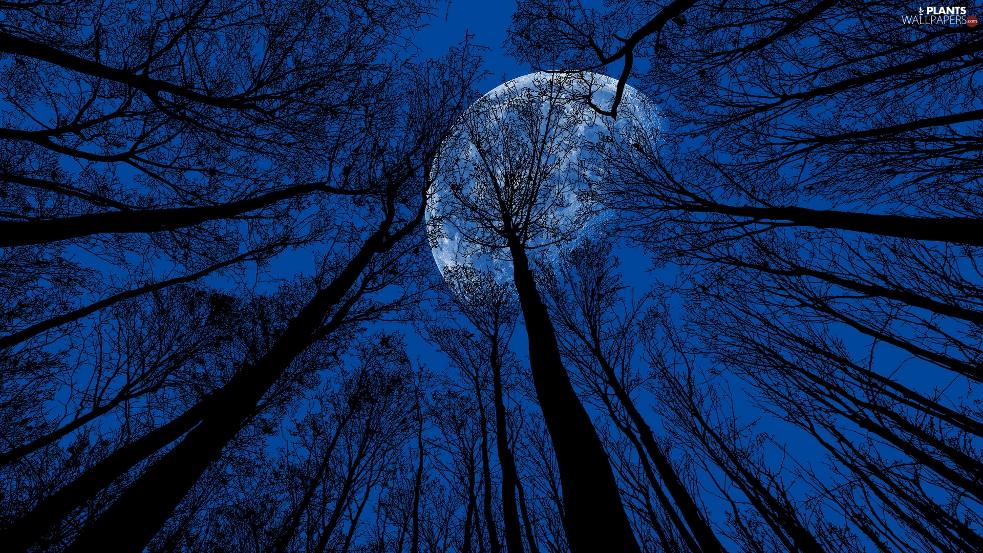Night, moon, trees, viewes, vertices