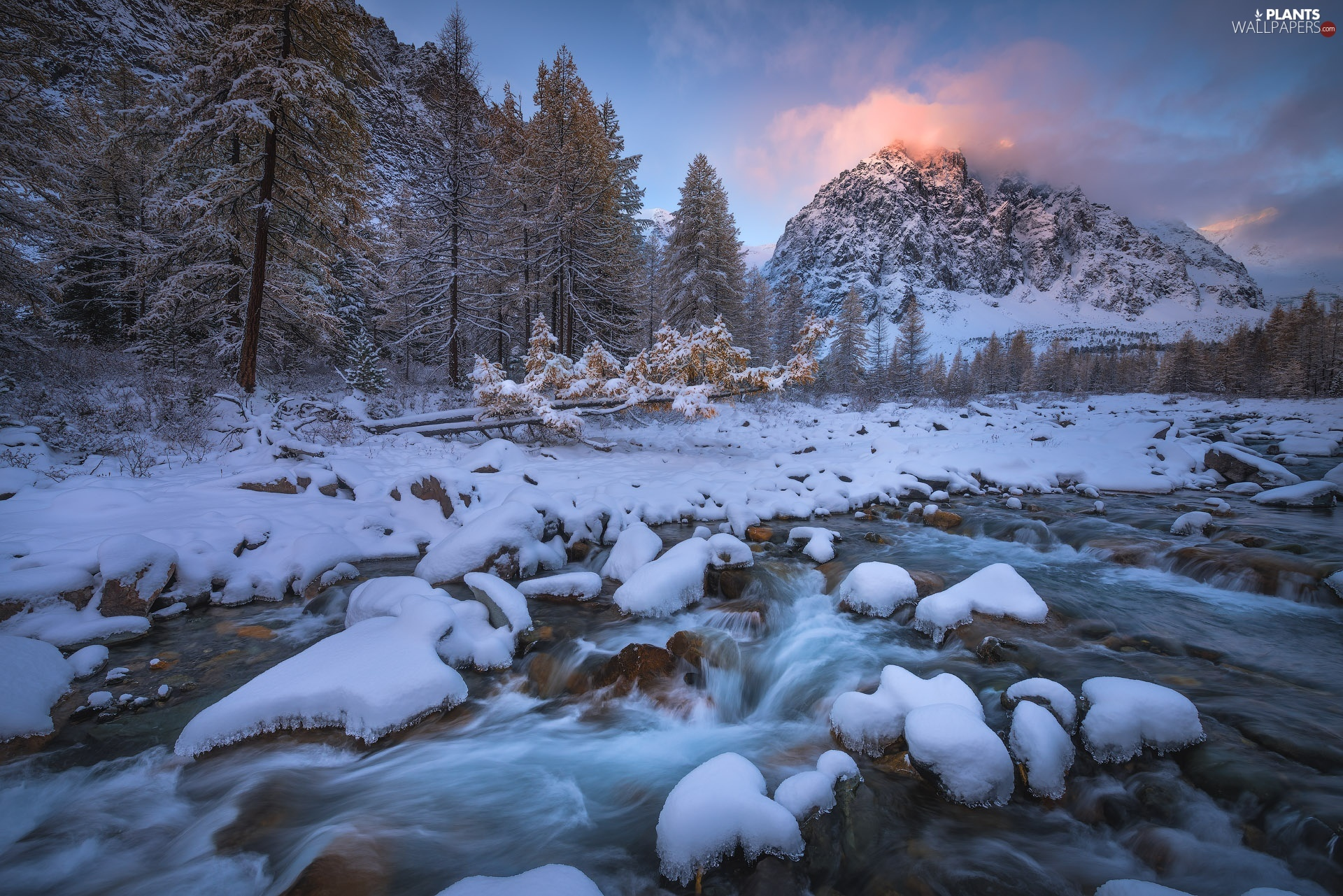 trees, River, fallen, Mountains, winter, viewes, trees