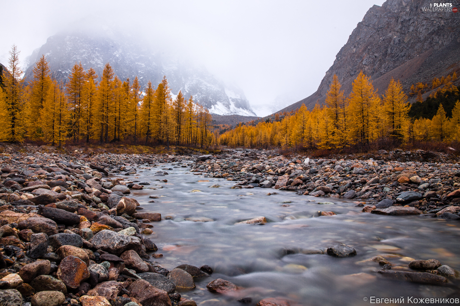 autumn, trees, Russia, viewes, Altai, River, Stones, Mountains
