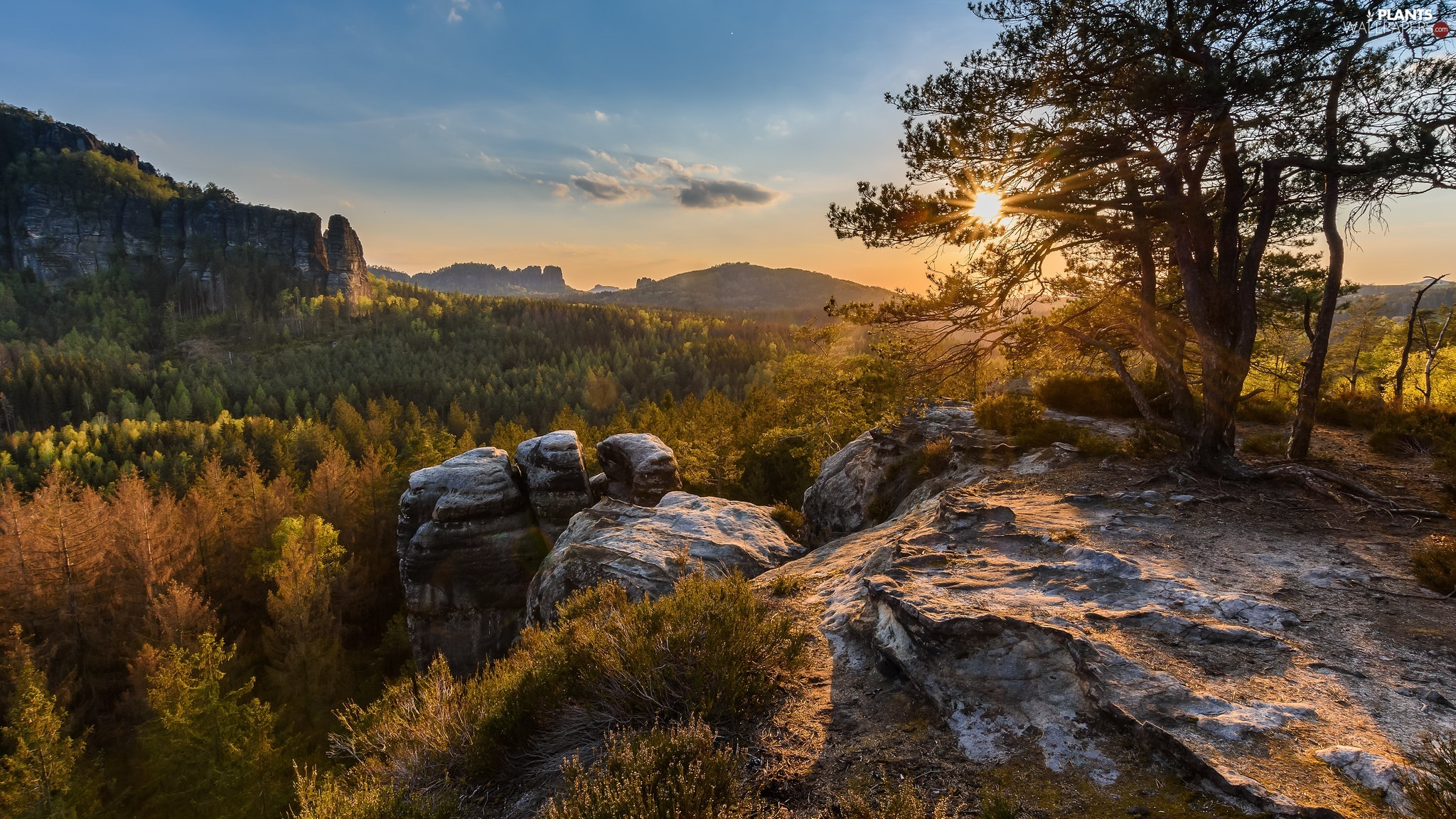 trees, D???nsk? vrchovina, Saxon Switzerland National Park, Germany, viewes, rocks