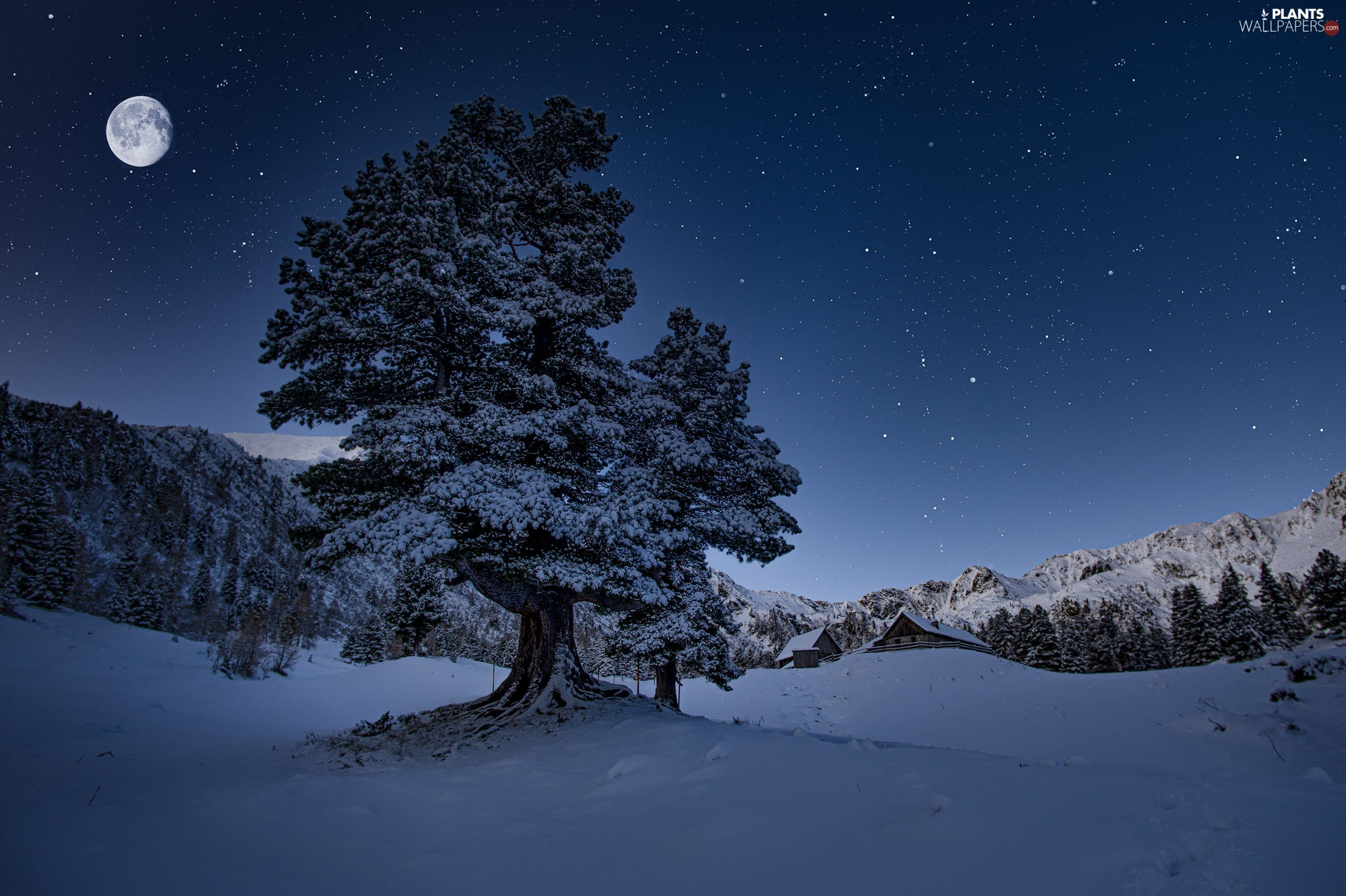 Night, winter, moon, star, Houses, snow, Mountains, forest, trees