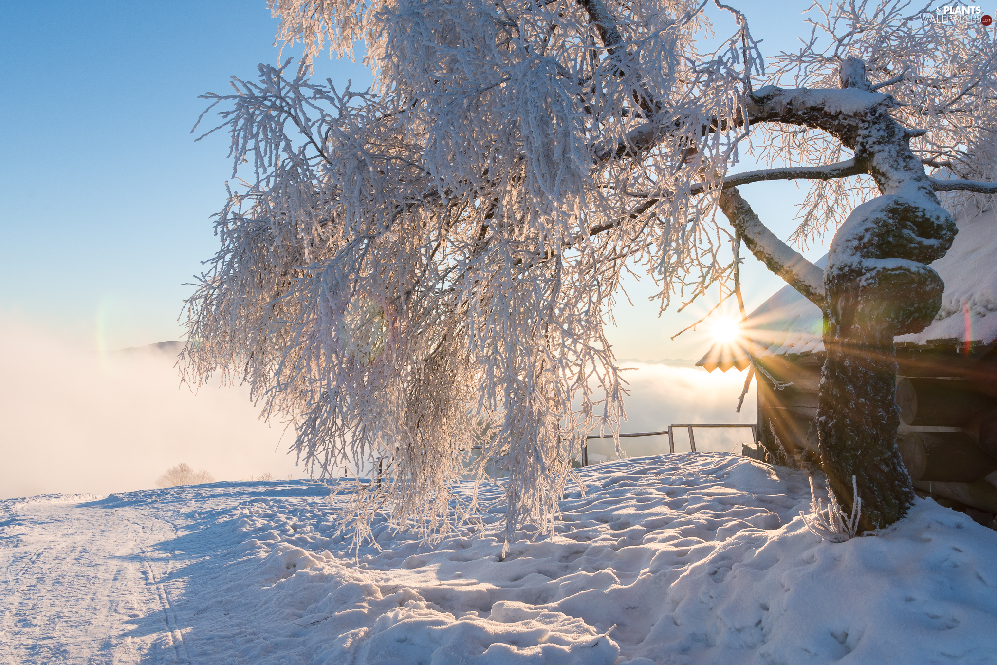 winter, house, rays of the Sun, trees