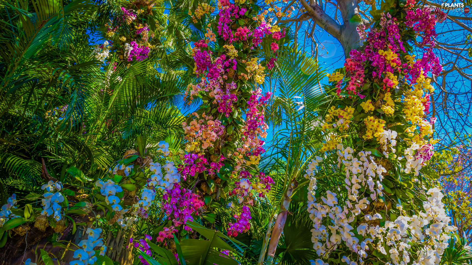 viewes, Palms, orchids, trees, Flowers