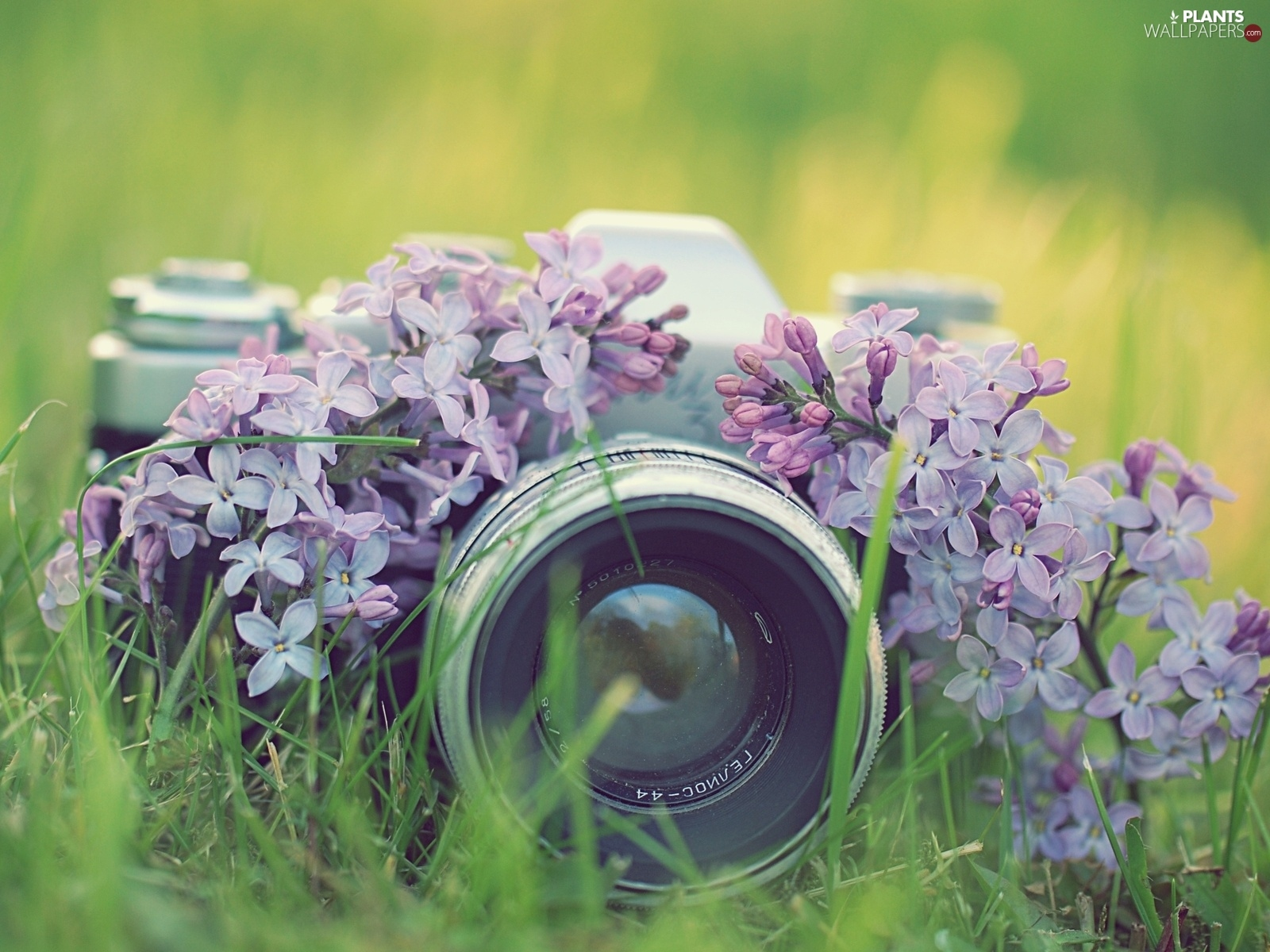 Flowers, Camera, photographic, lilac