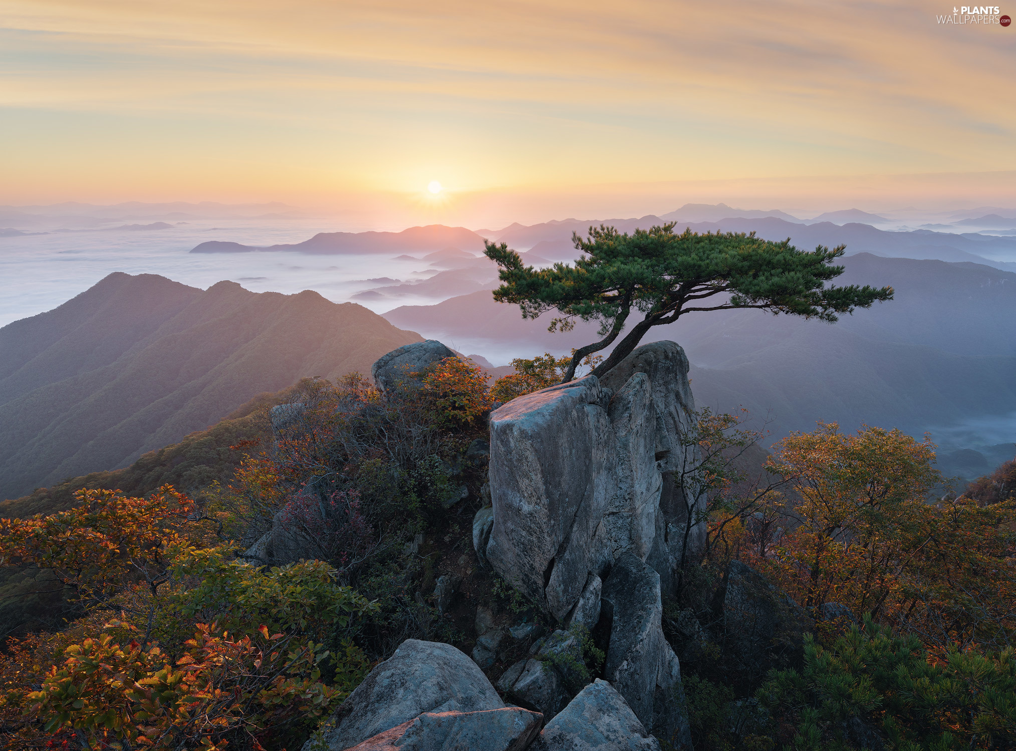 Sunrise, Daedunsan Provincial Park, trees, viewes, North Jeolla Province, South Korea, Mountains, Fog, pine