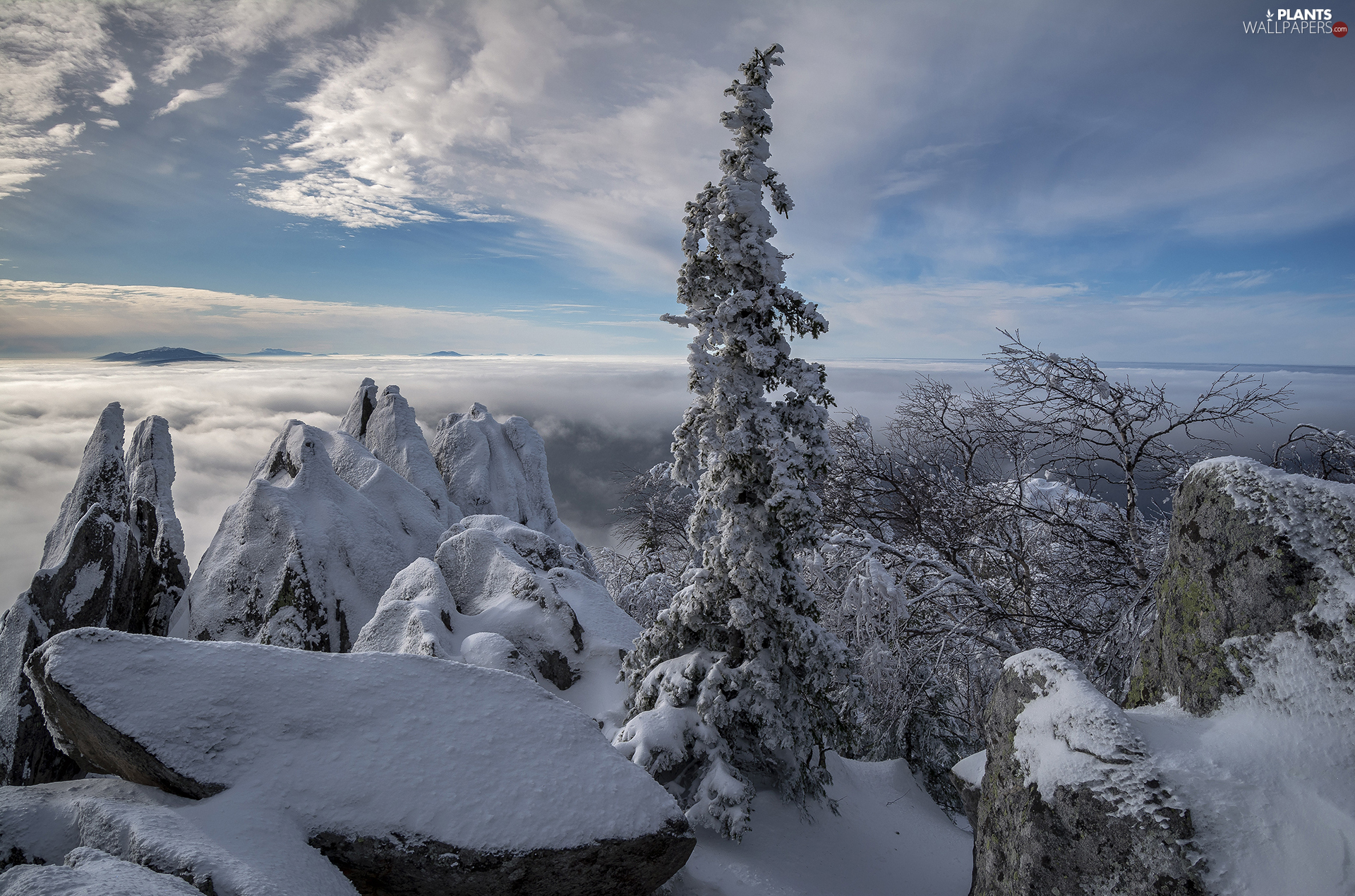 viewes, Mountains, winter, rocks, Fog, trees