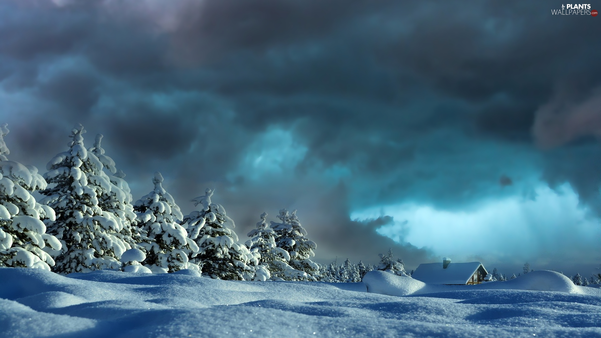 drifts, Spruces, clouds, house, dark, snow, winter, Sky