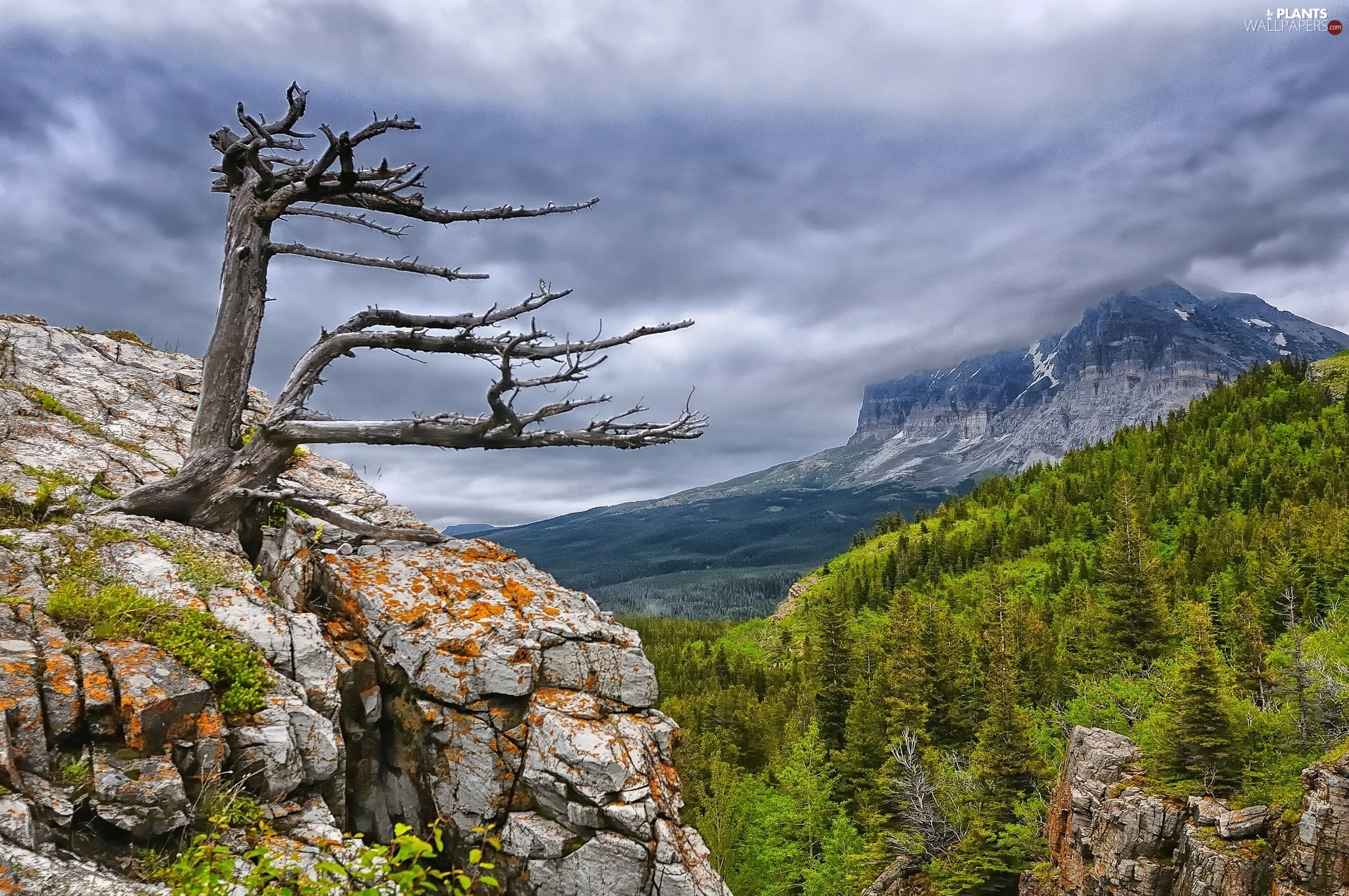 Clouds, woods, dry, rocks, Mountains, Sky, trees