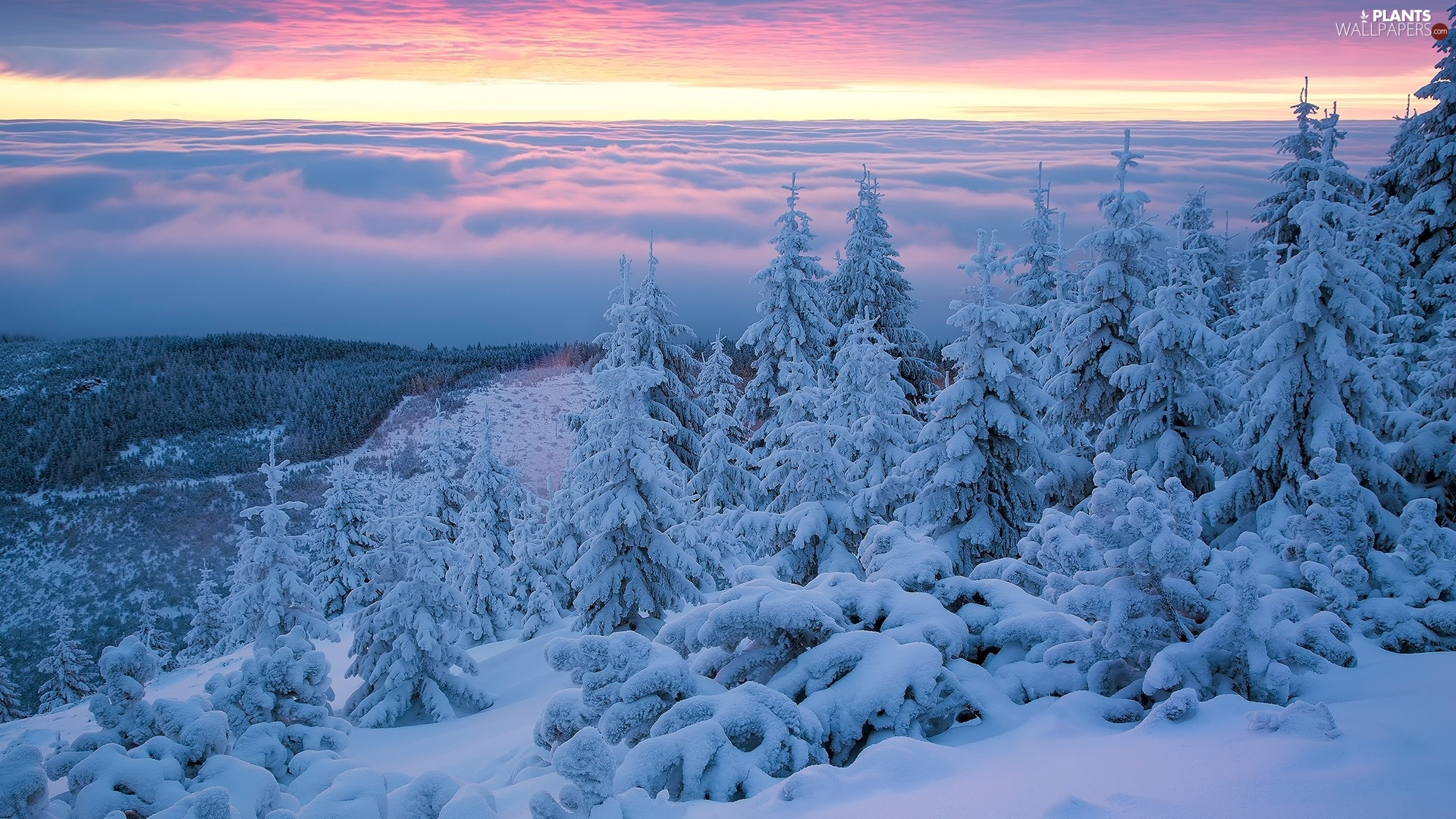 snow, winter, Sunrise, trees, Giant Mountains, Poland, Spruces, Mountains, viewes