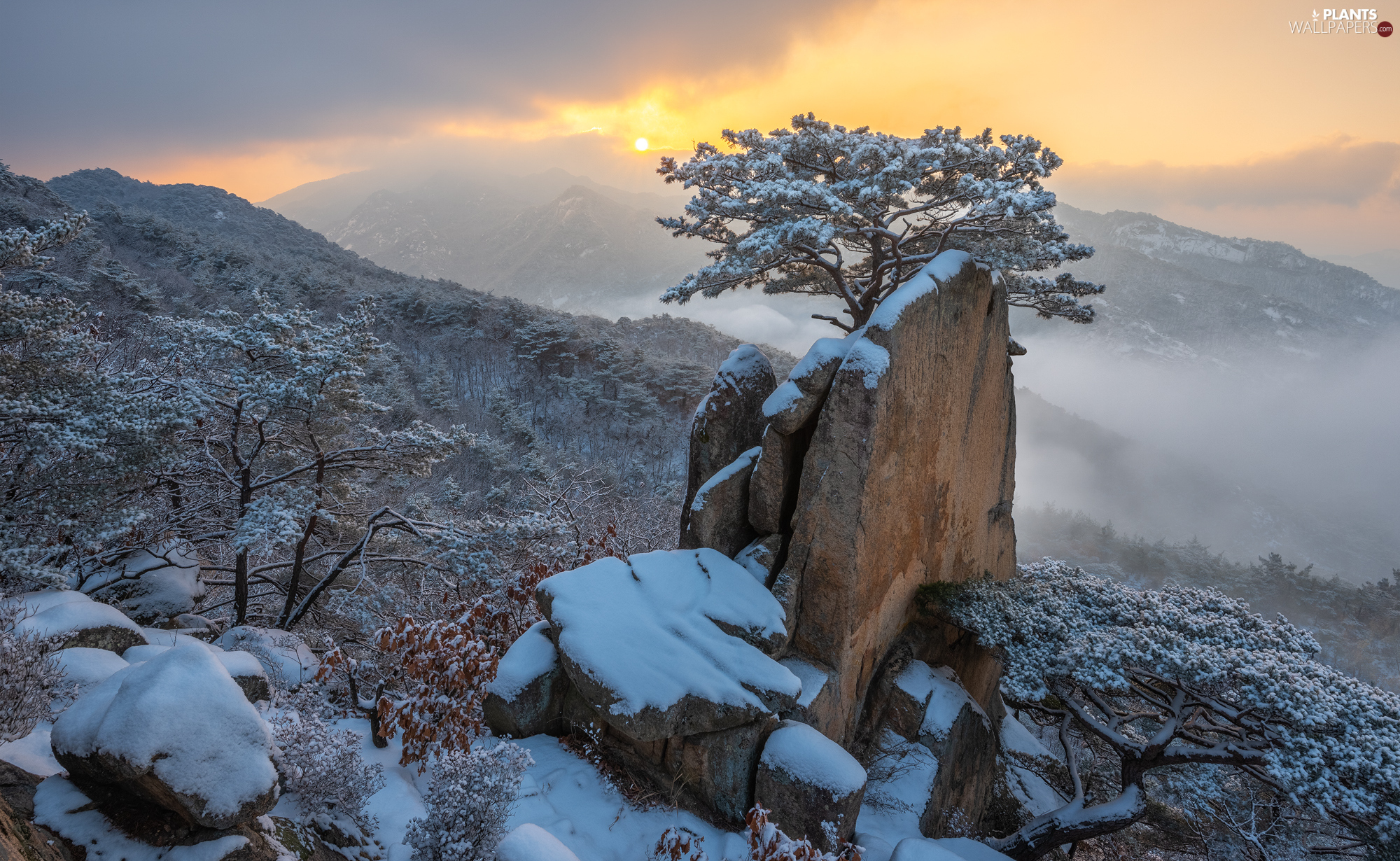 snow, winter, Mountains, trees, Fog, clouds, rocks, Great Sunsets, Stones