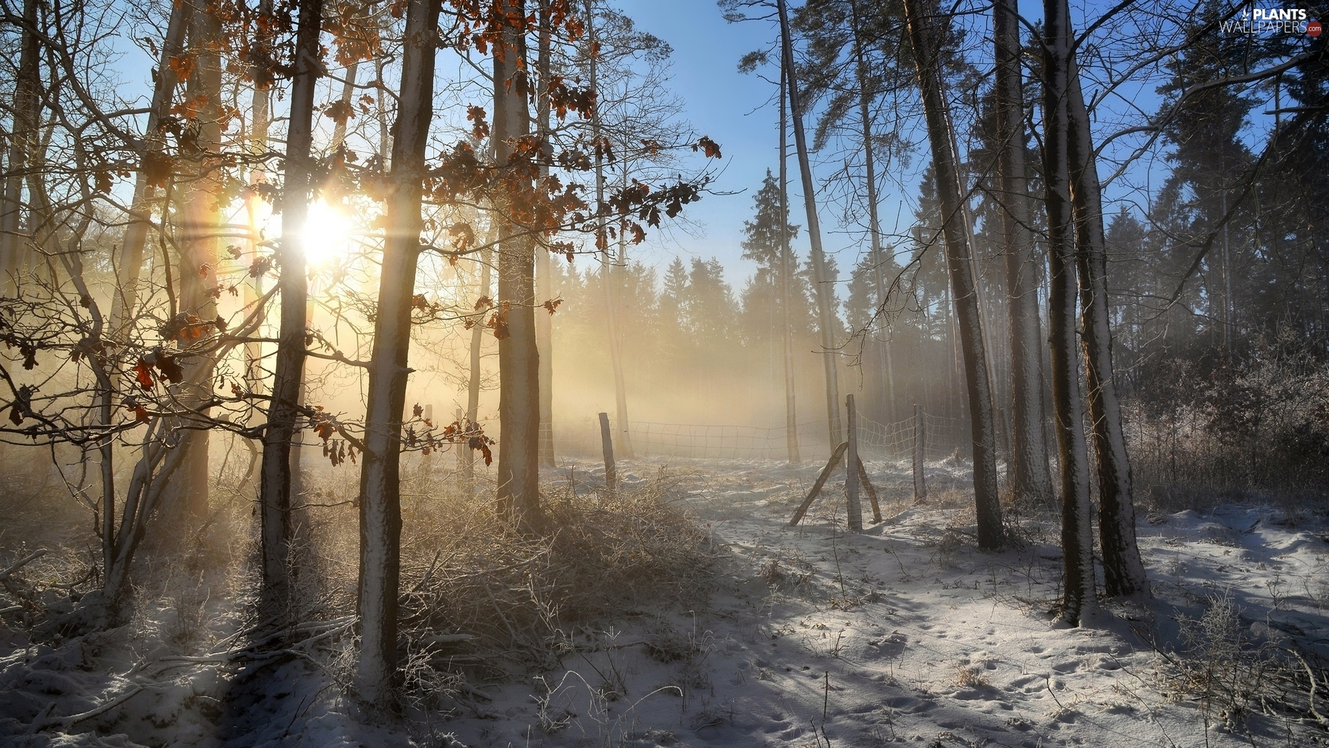 viewes, forest, Fog, snow, Sunrise, trees