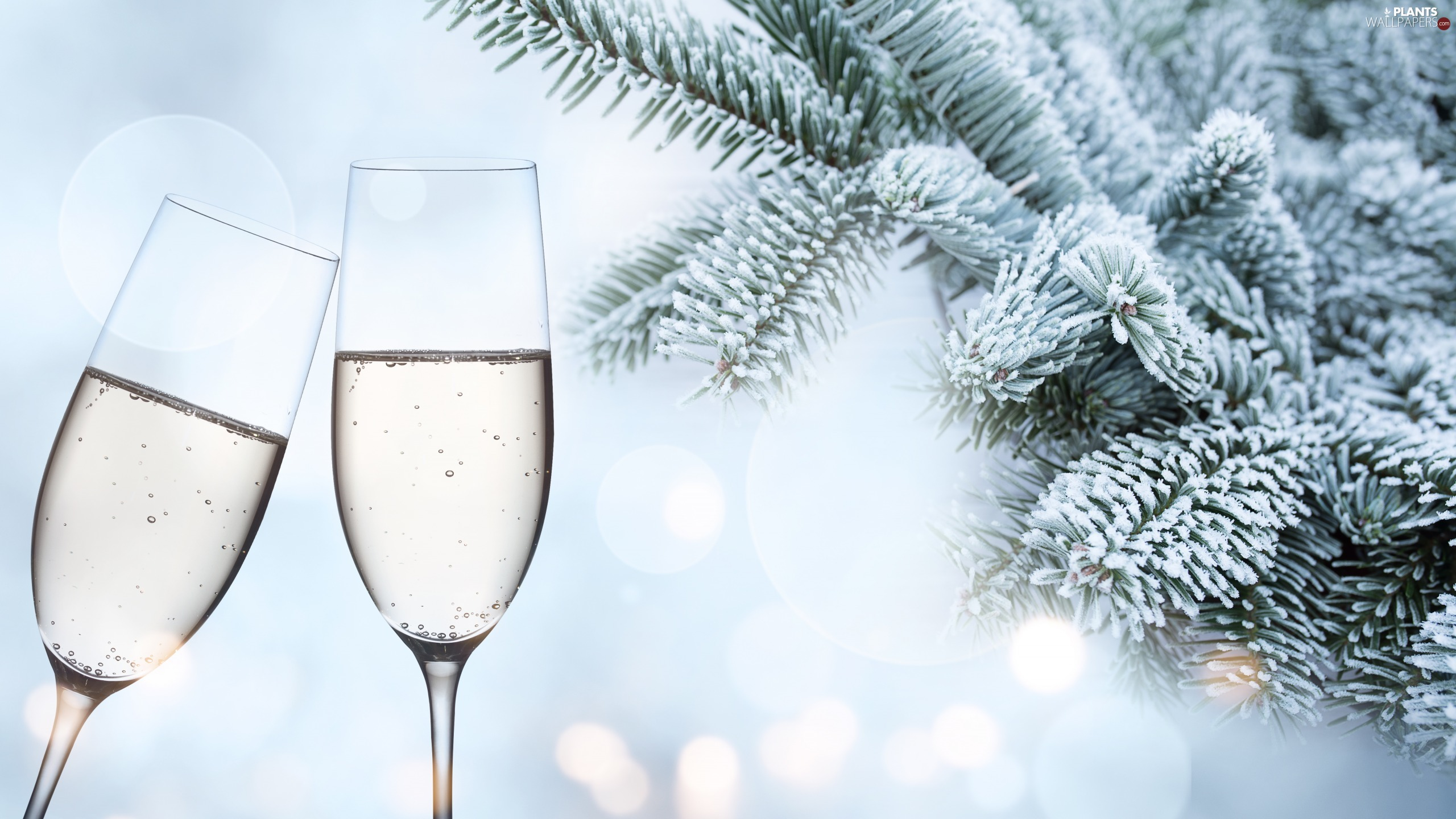 Twigs, glasses, snow, Champagne, Two cars, spruce, Bokeh