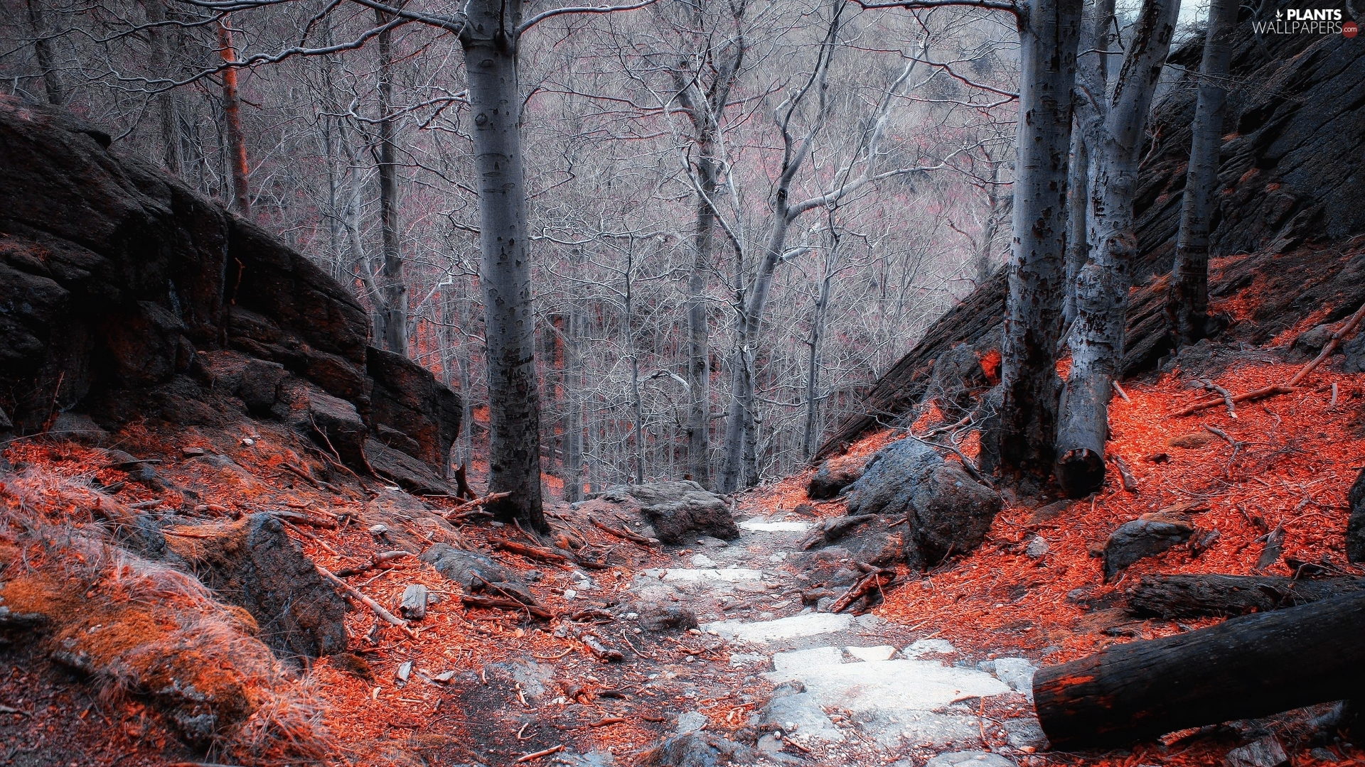Stones, leafless, viewes, Leaf, Way, forest, trees, autumn, fallen, rocks