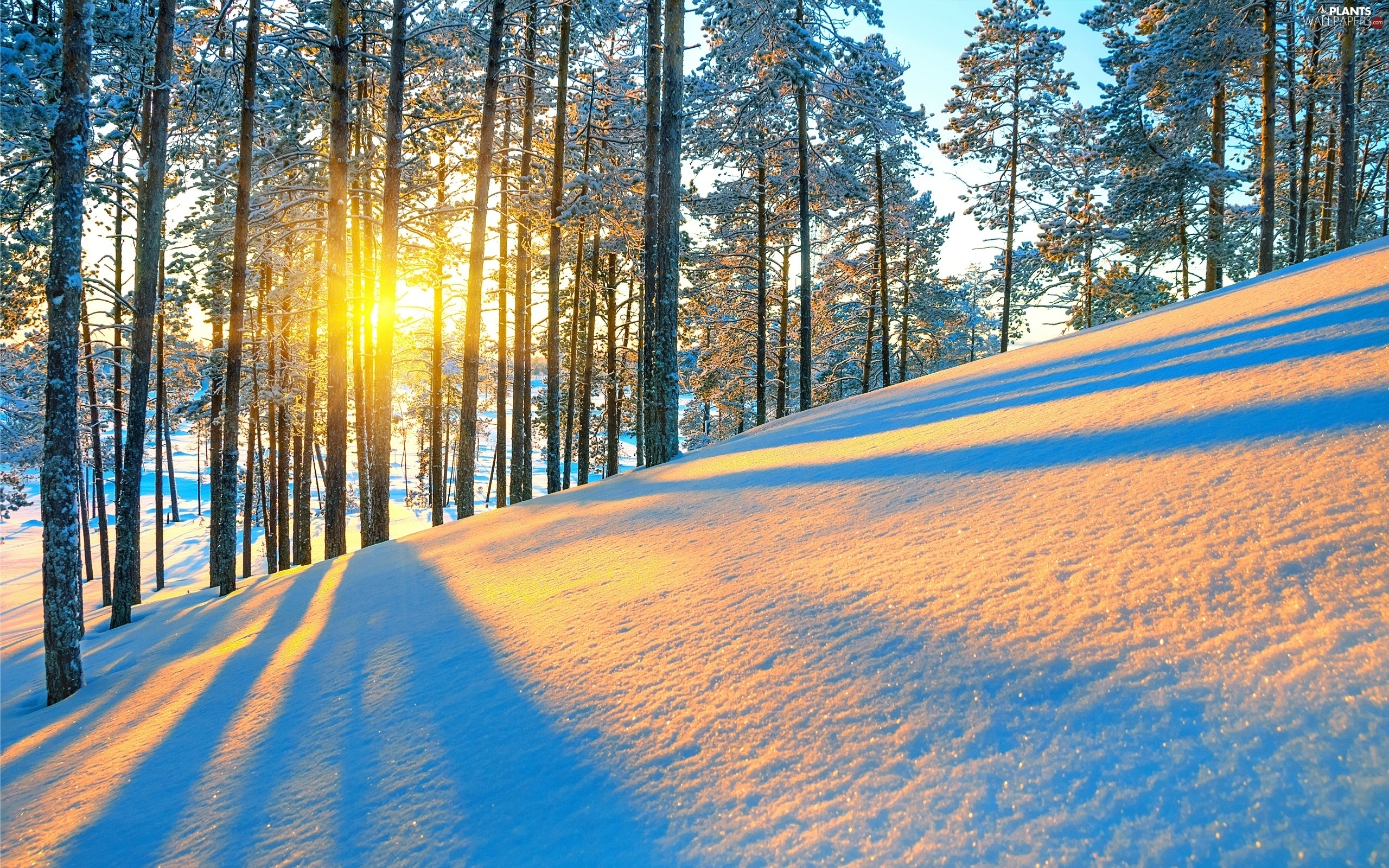viewes, mountains, sun, winter, rays, trees
