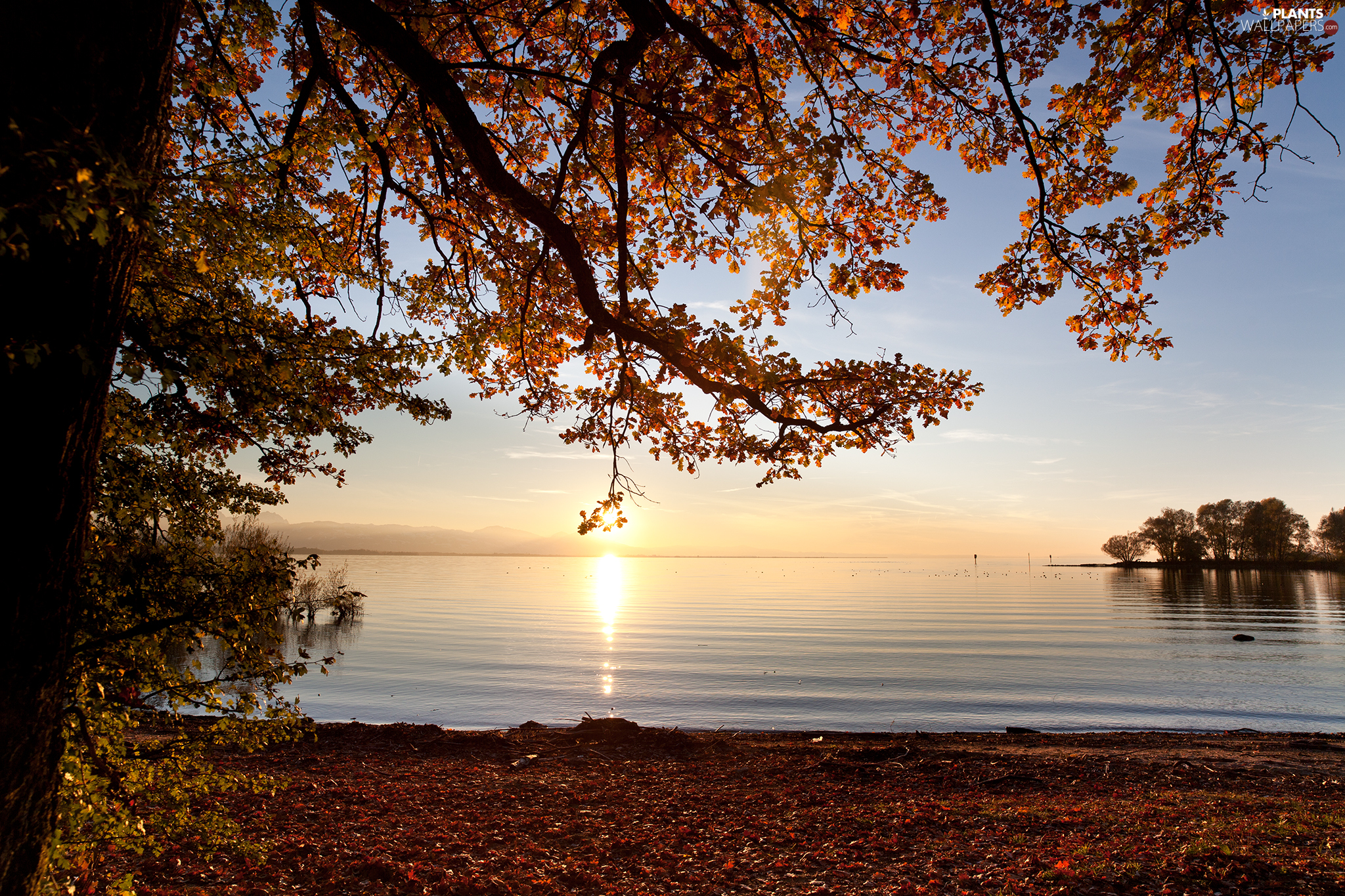 viewes, Sunrise, Bodensee, trees, Austria