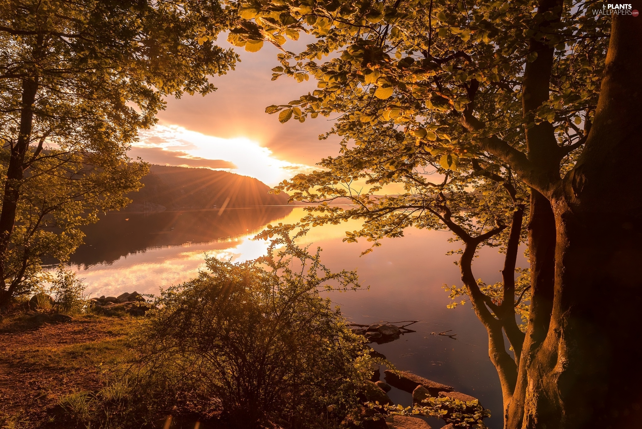 lake, Sunrise, trees, viewes, autumn