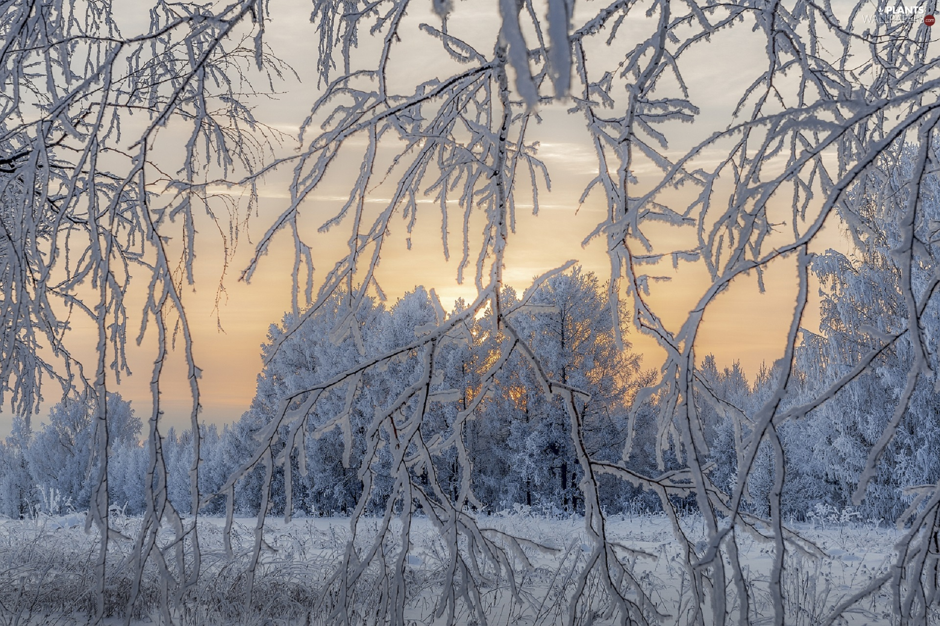 snow, trees, White frost, viewes, winter, Twigs, Sunrise