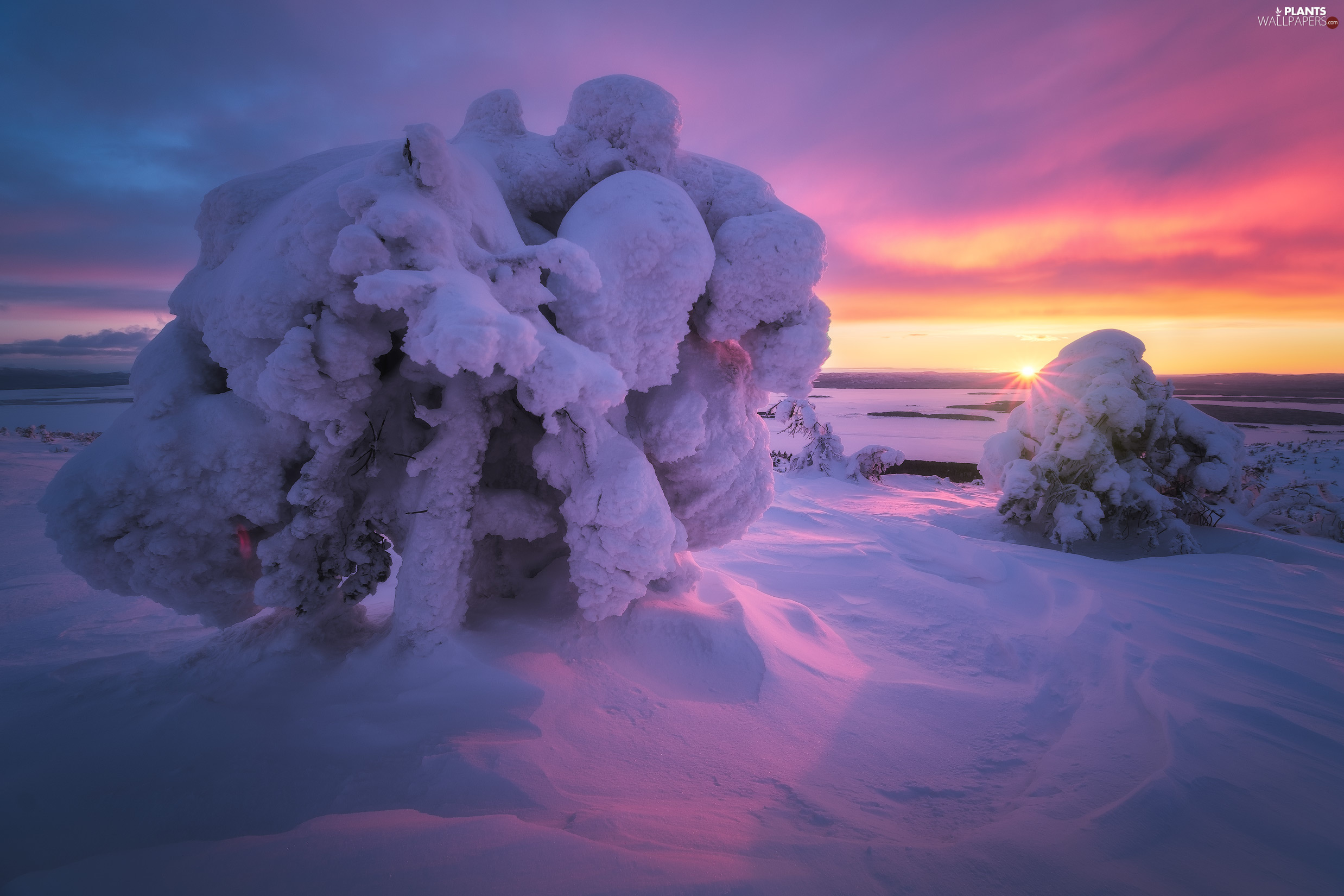 trees, winter, Great Sunsets, clouds, viewes, Snowy
