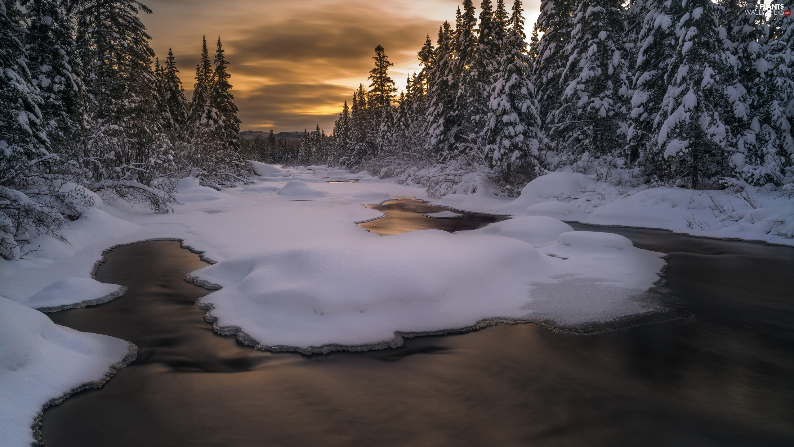 Spruces, trees, River, viewes, winter, forest, Great Sunsets