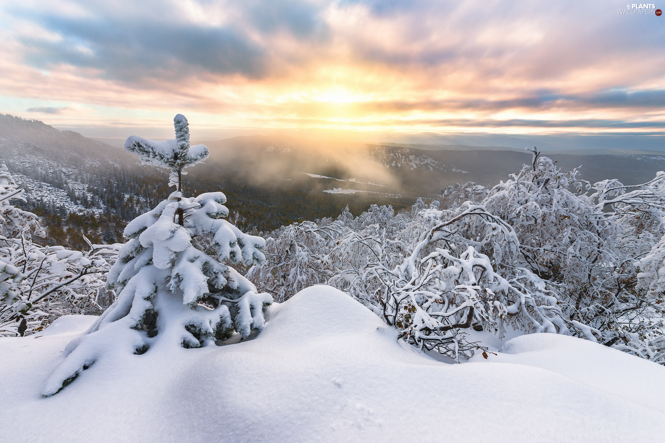 The Hills, winter, Mountains, trees, snow, Sunrise, clouds, Fog, viewes