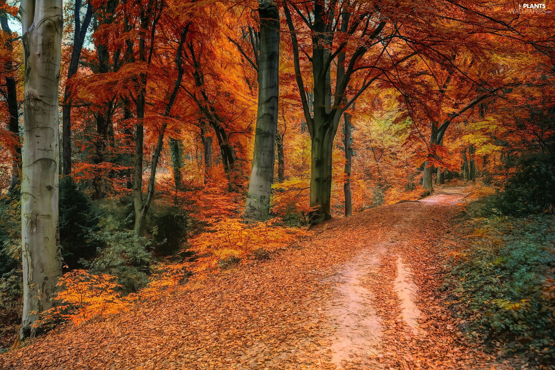 fallen, Leaf, forest, color, viewes, Way, autumn, trees