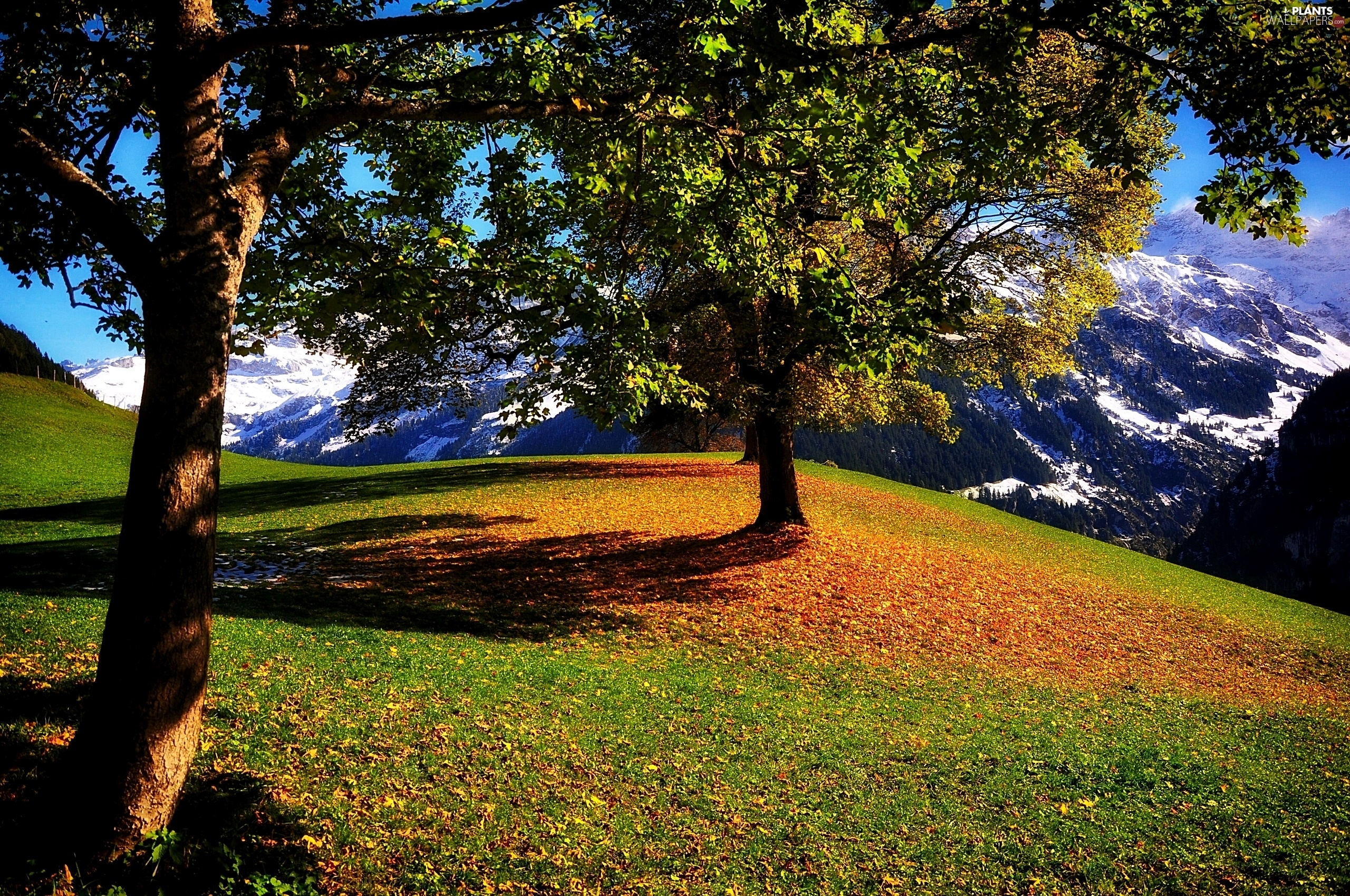viewes, autumn, car in the meadow, trees, Mountains
