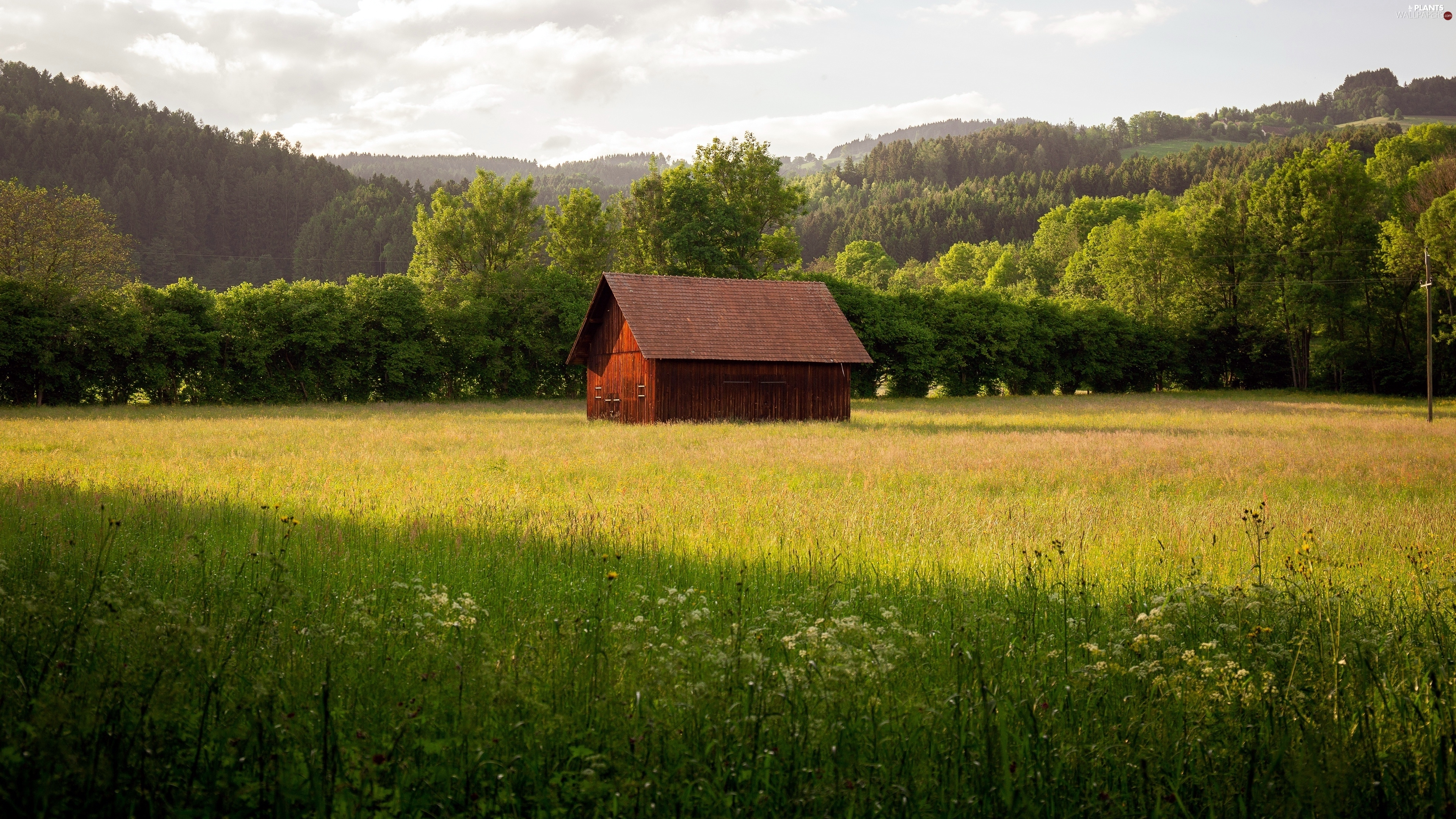 Meadow, Flowers, Mountains, woods, viewes, cote, house, trees