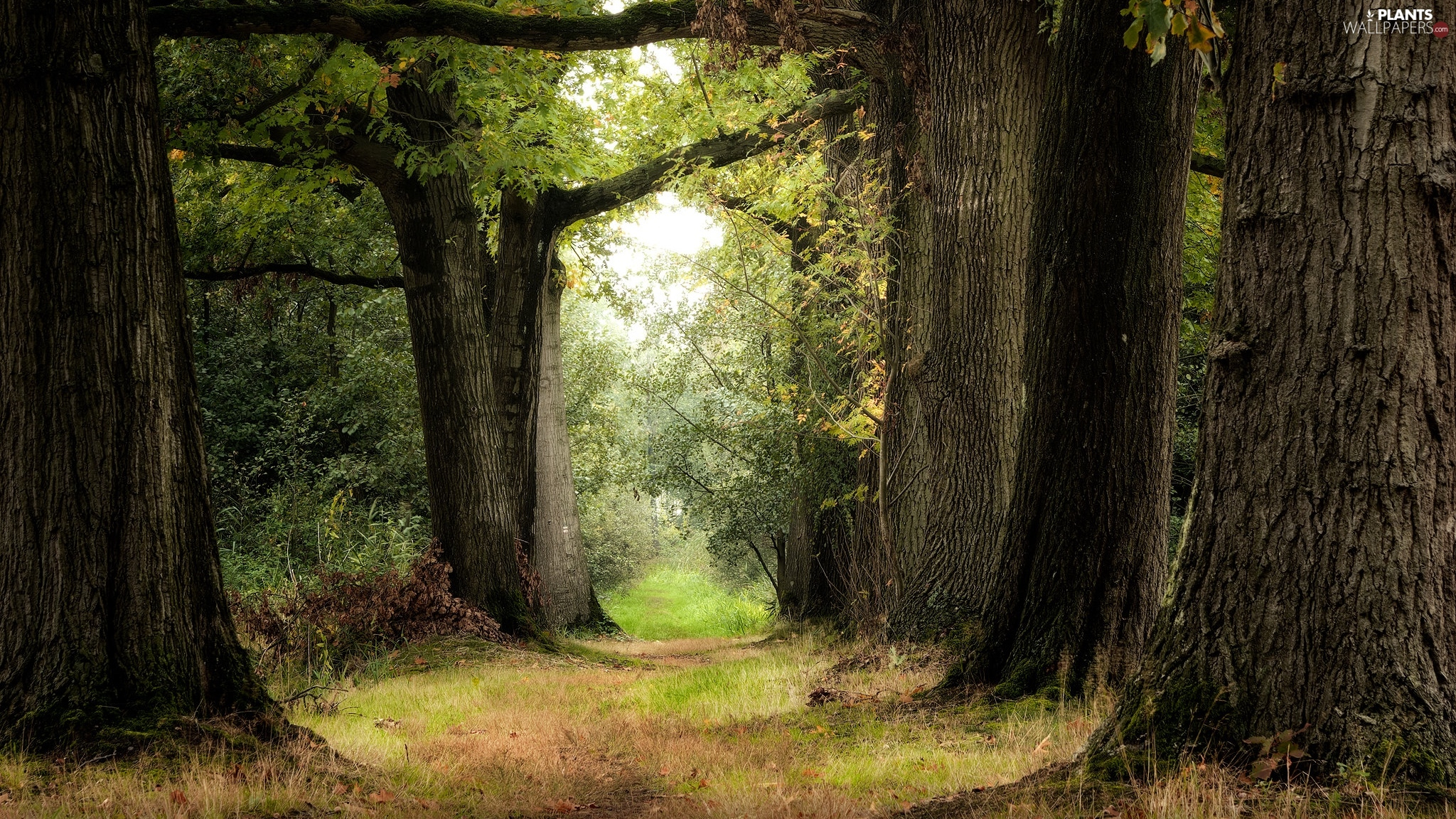 viewes, summer, Path, trees, forest, Stems, grass