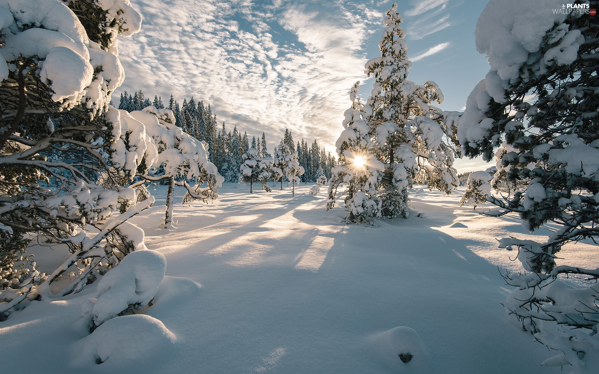 trees, winter, snow, rays of the Sun, viewes, Snowy