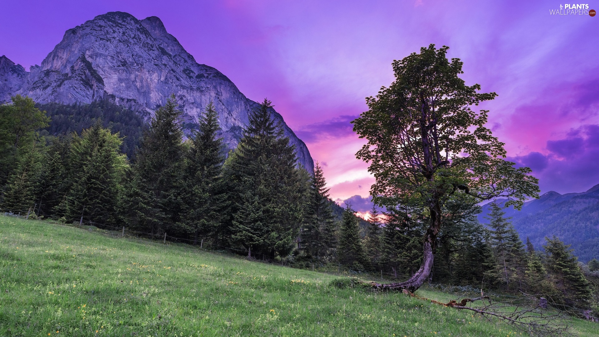 viewes, Meadow, mountains, trees, Great Sunsets