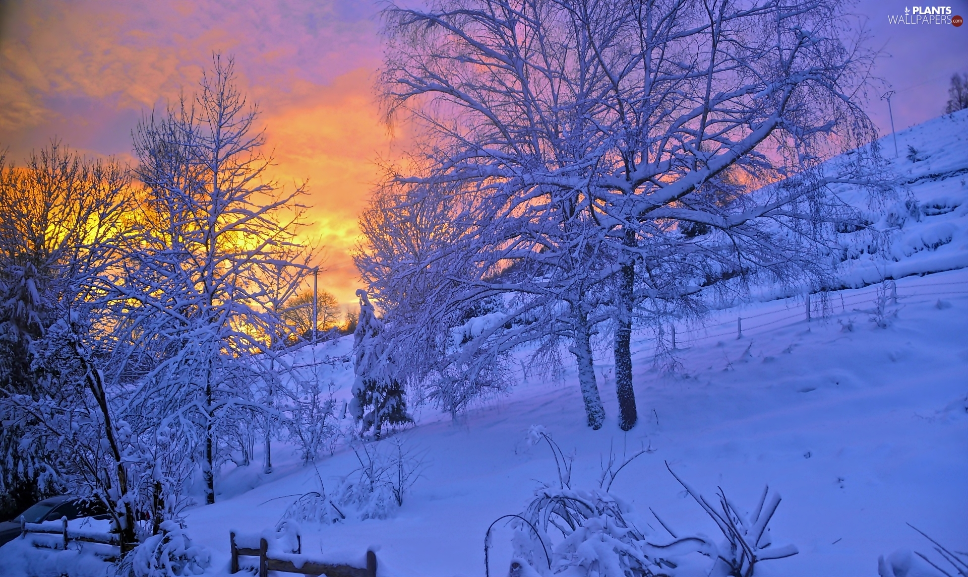 trees, viewes, winter, Snowy, Great Sunsets