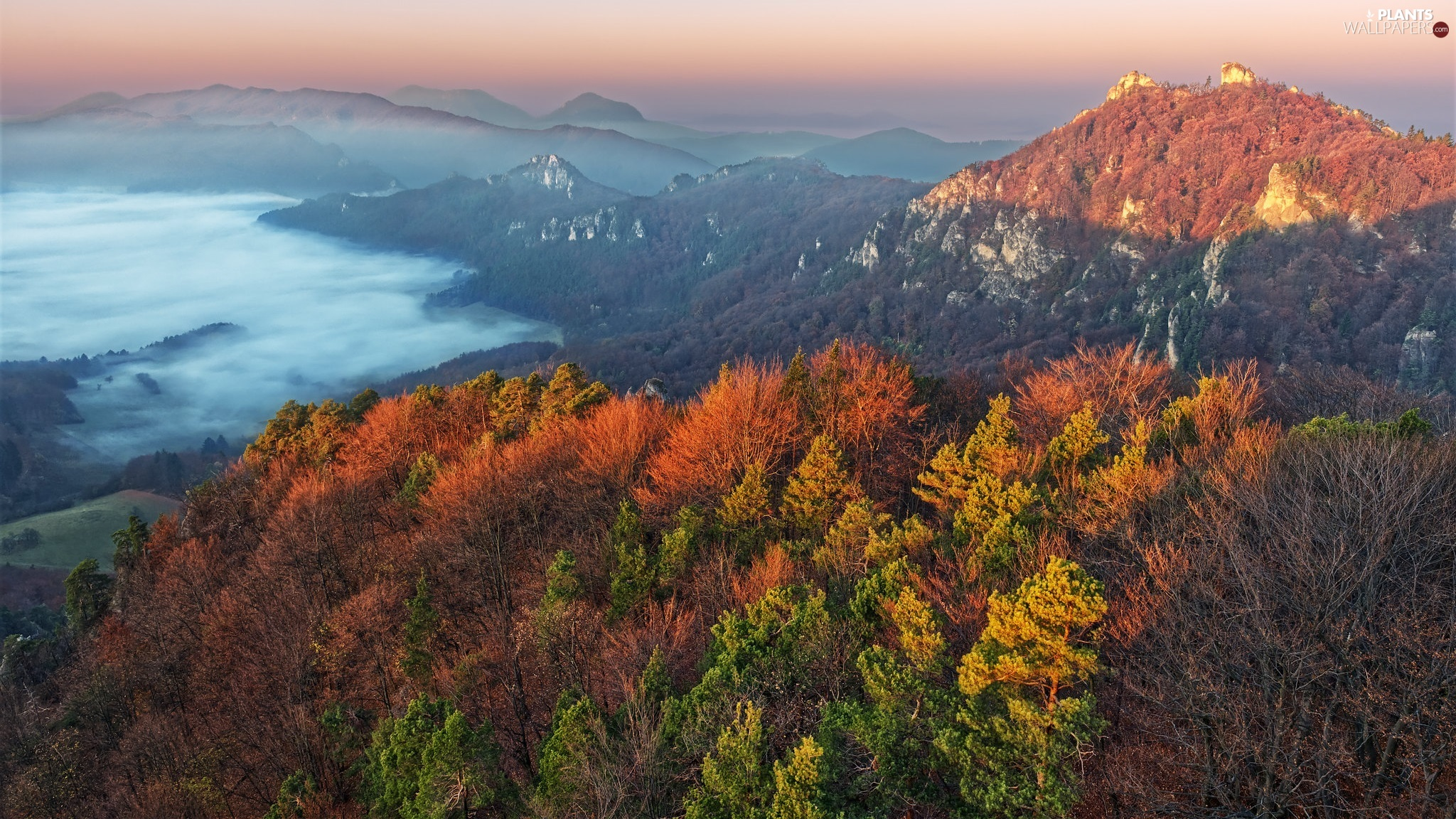 Fog, Valley, woods, color, viewes, autumn, Mountains, trees