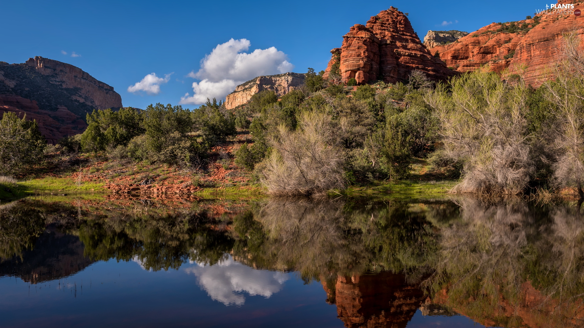 rocks, Red, Bush, trees, Arizona, The United States, lake, Sedona, viewes