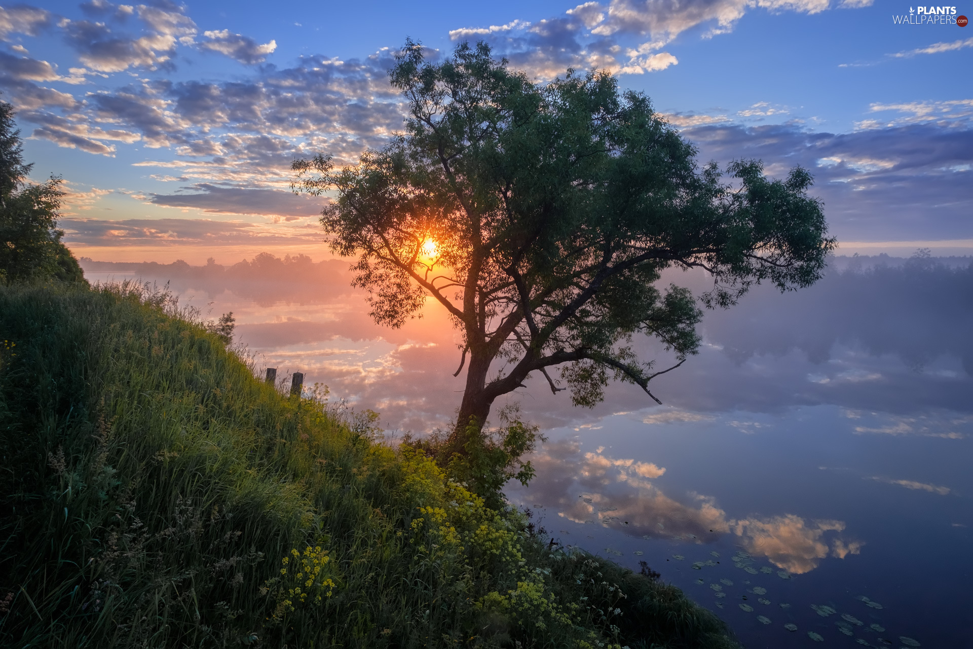 Sunrise, trees, clouds, VEGETATION, River, Fog, reflection
