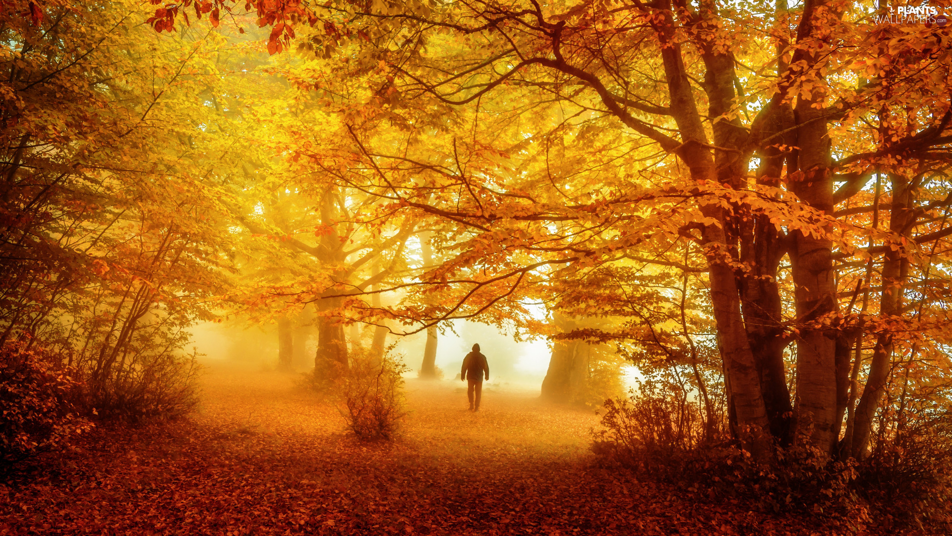 a man, autumn, viewes, forest, trees, Fog