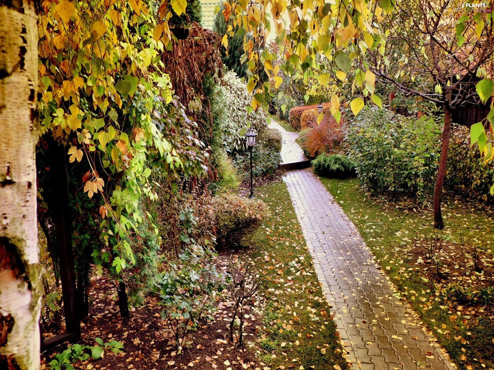 Leaf, Park, viewes, autumn, trees, Path