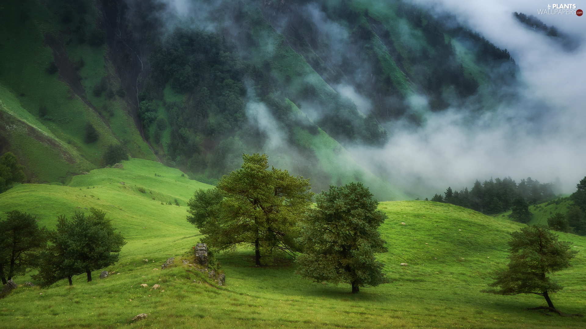 slope, Mountains, trees, viewes, Fog, forested