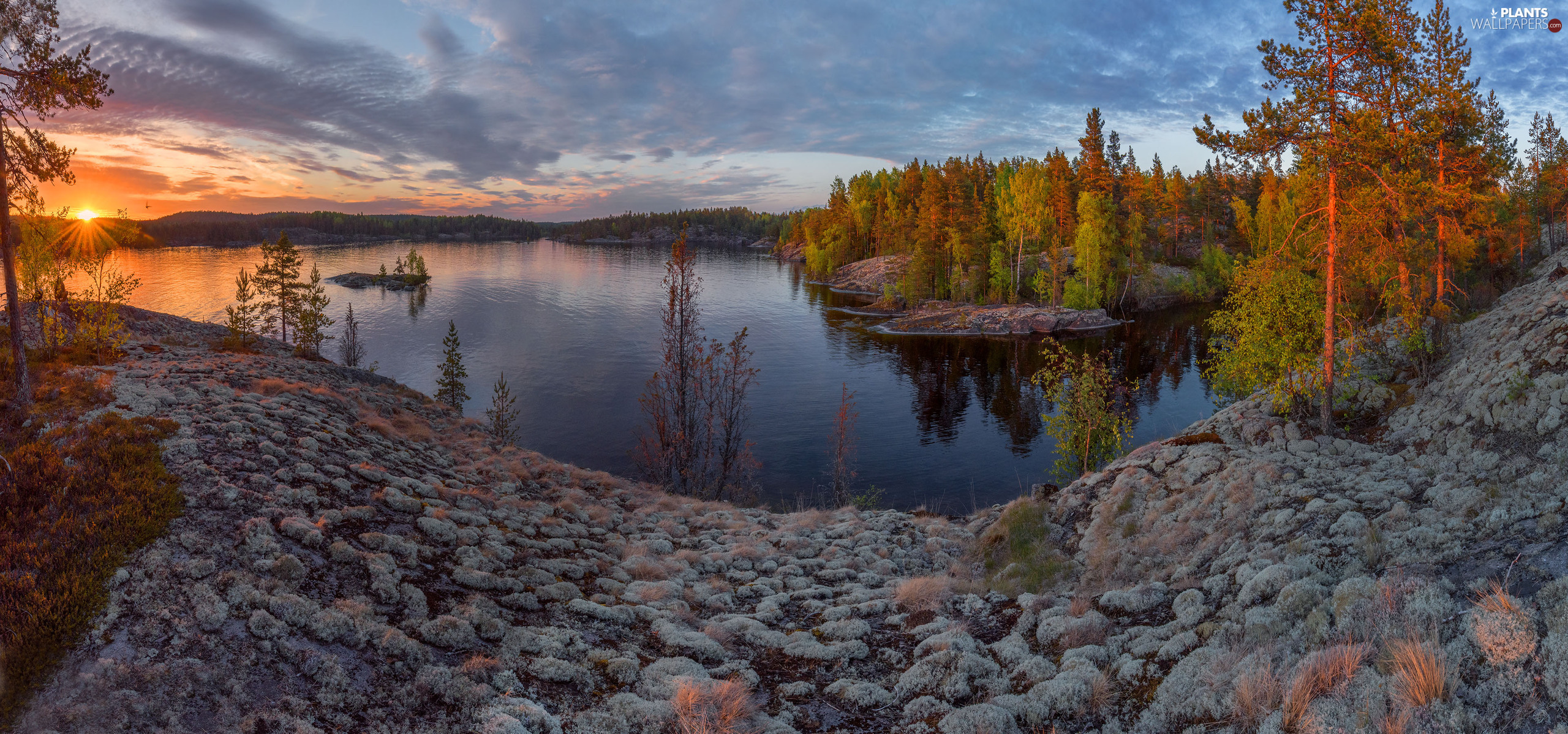 viewes, forest, Russia, Great Sunsets, Karelia, trees, Lake Ladoga, clouds