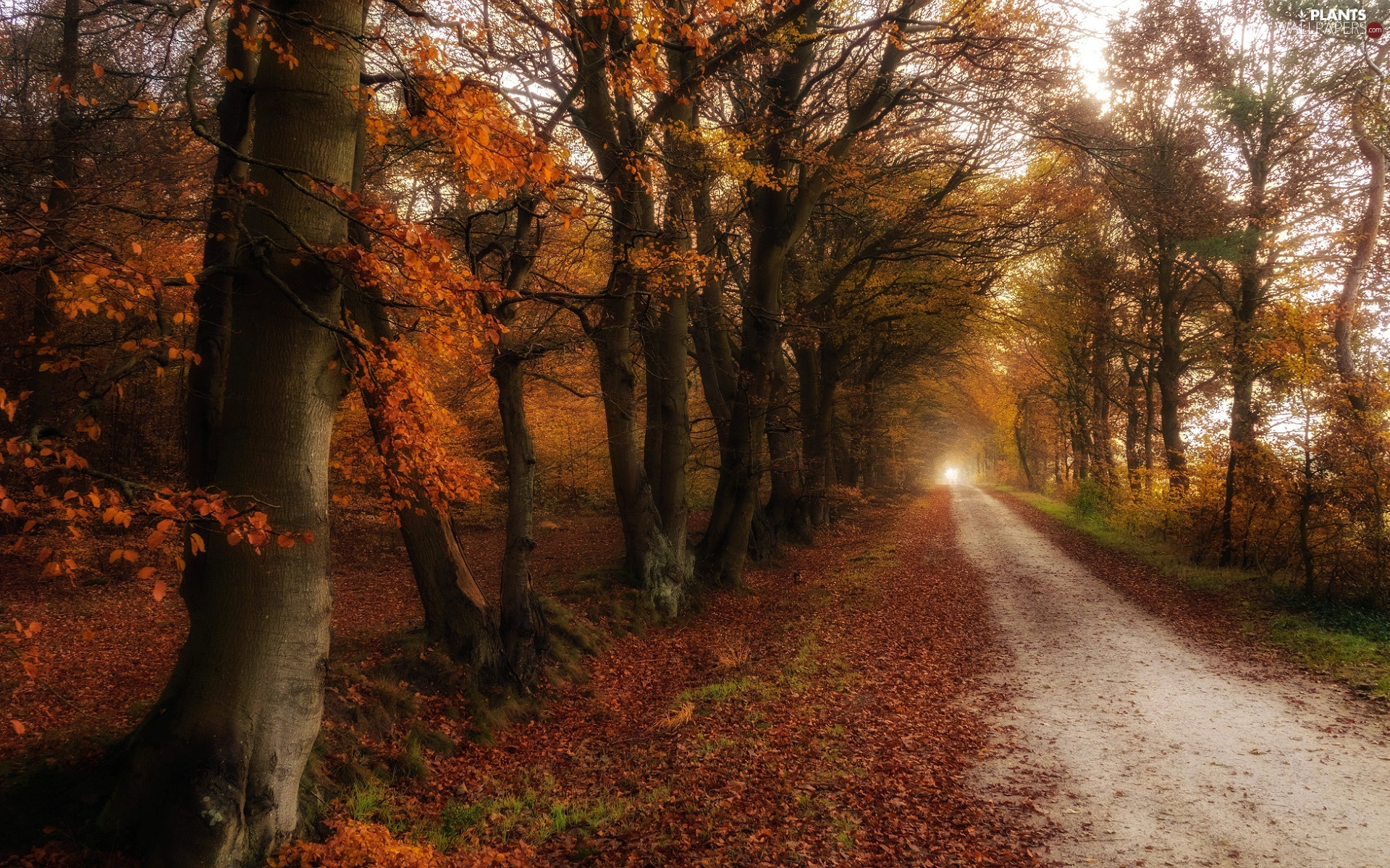 Way, trees, Leaf, viewes, Autumn, fallen, autumn