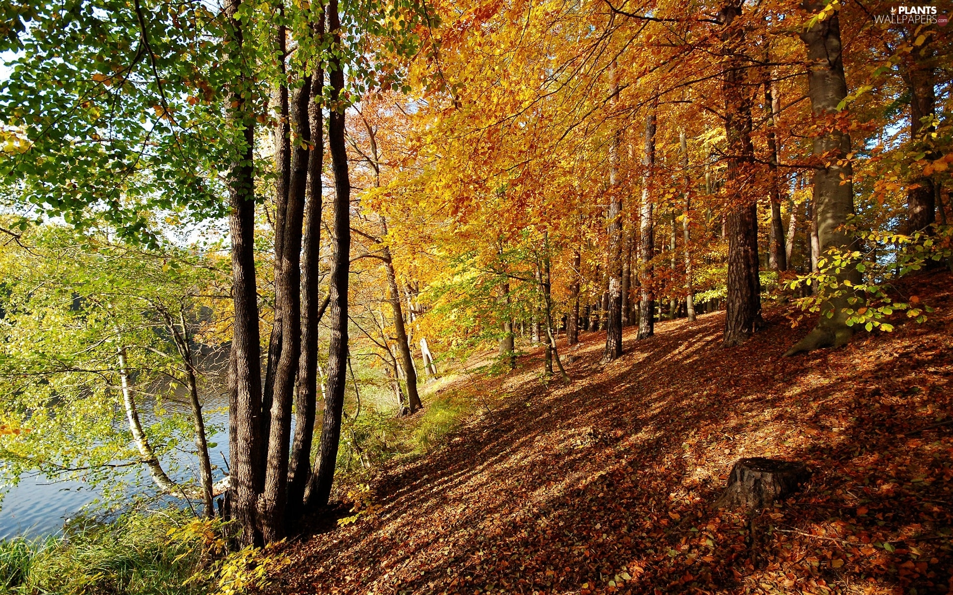 viewes, River, scarp, trees, autumn