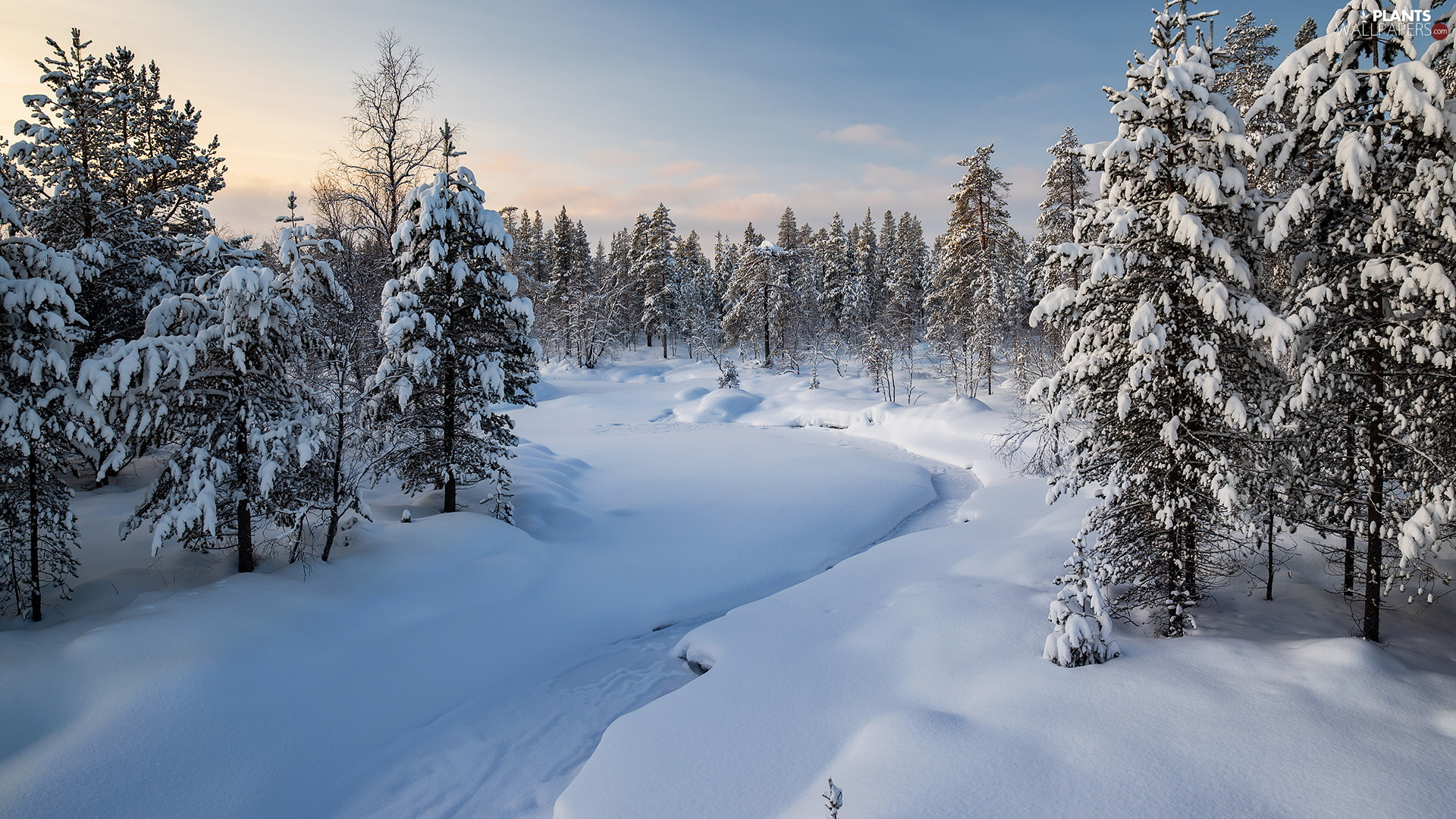 Snowy, Spruces, River, trees, snow, forest, winter, viewes