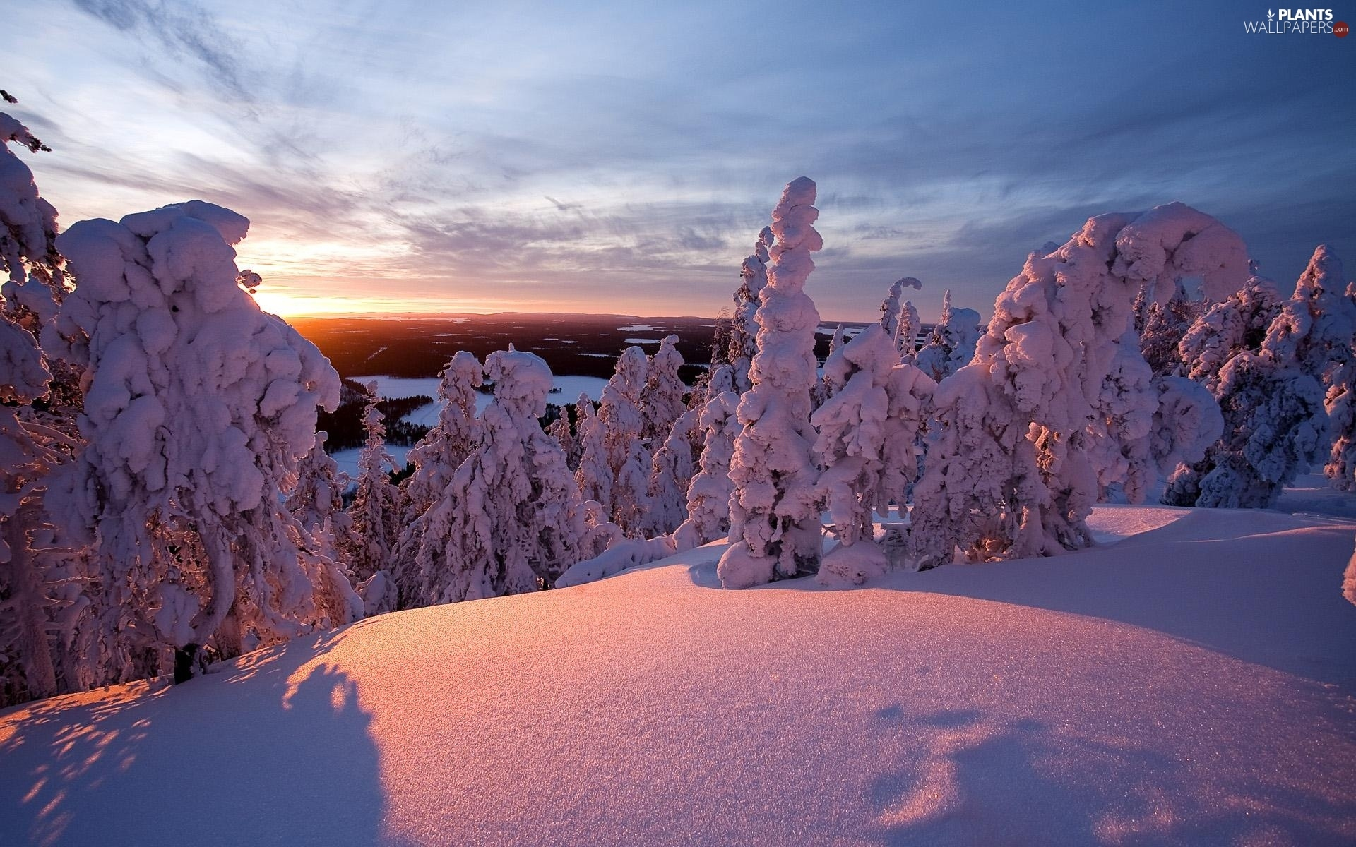 viewes, Great Sunsets, Snowy, trees, winter