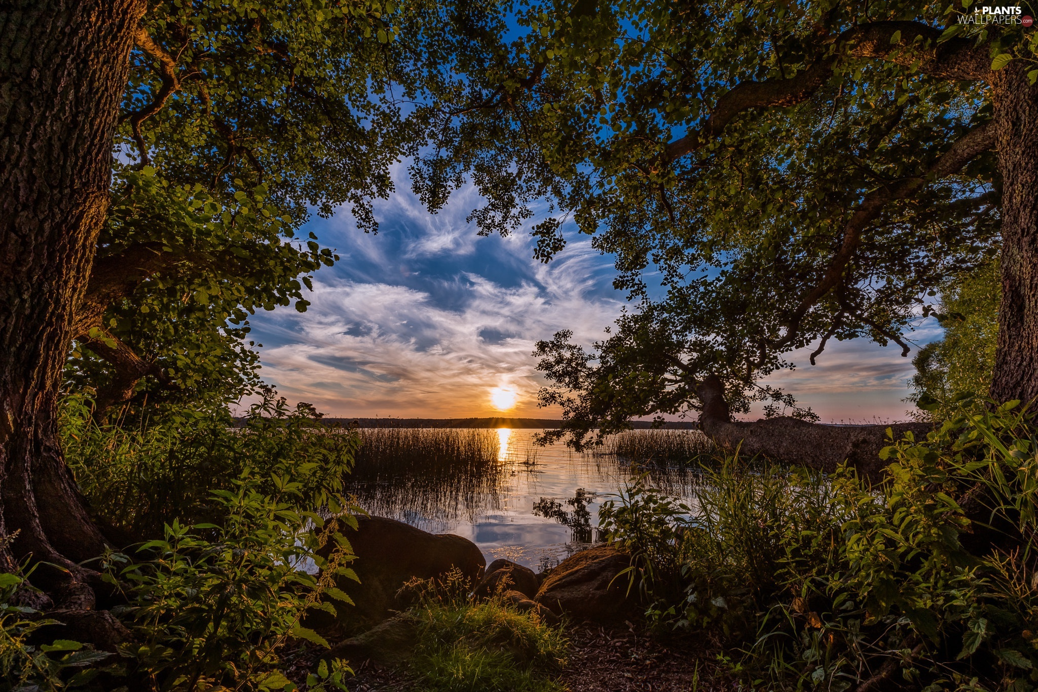 viewes, coast, Great Sunsets, Stones, Plants, trees, lake, grass