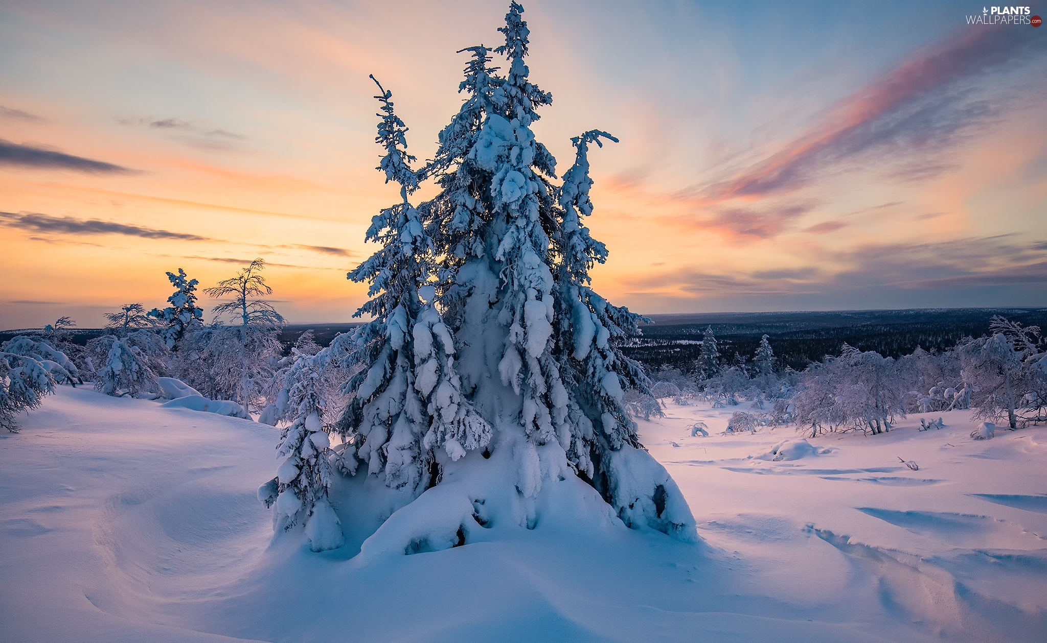 trees, snow, trees, Snowy, winter, Great Sunsets, viewes