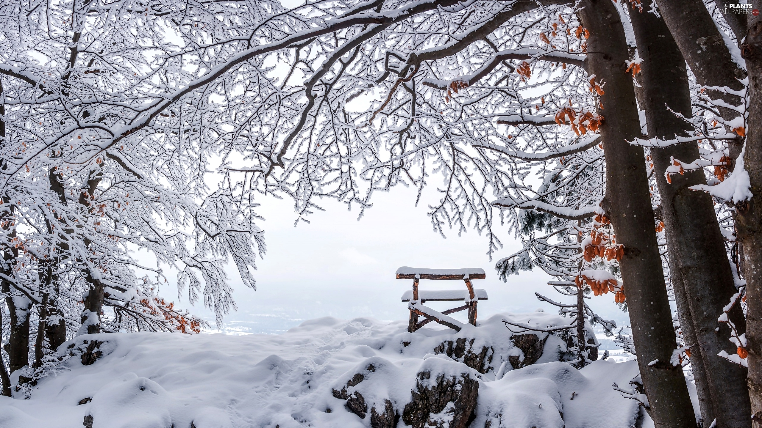 trees, Bench, winter, viewes