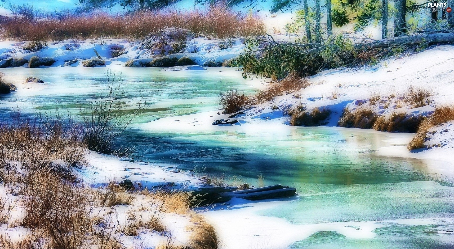 winter, trees, viewes, River