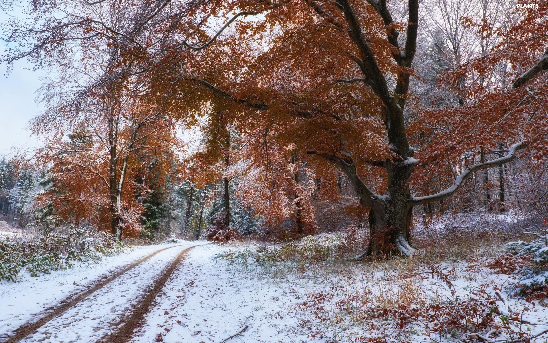 forest, autumn, viewes, Way, trees, snow